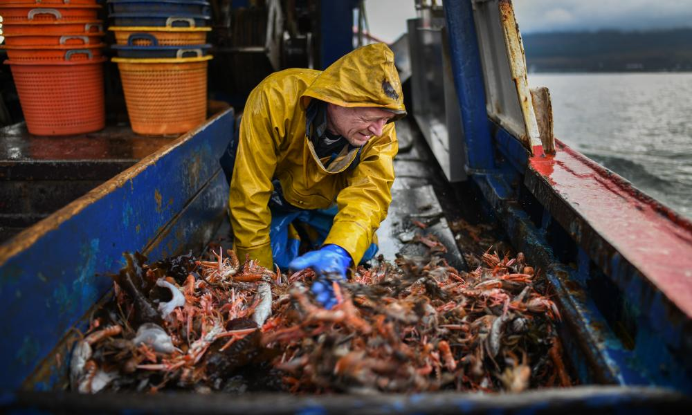 Angus Brown lands a prawn catch from Loch Long in Greenock, Scotland