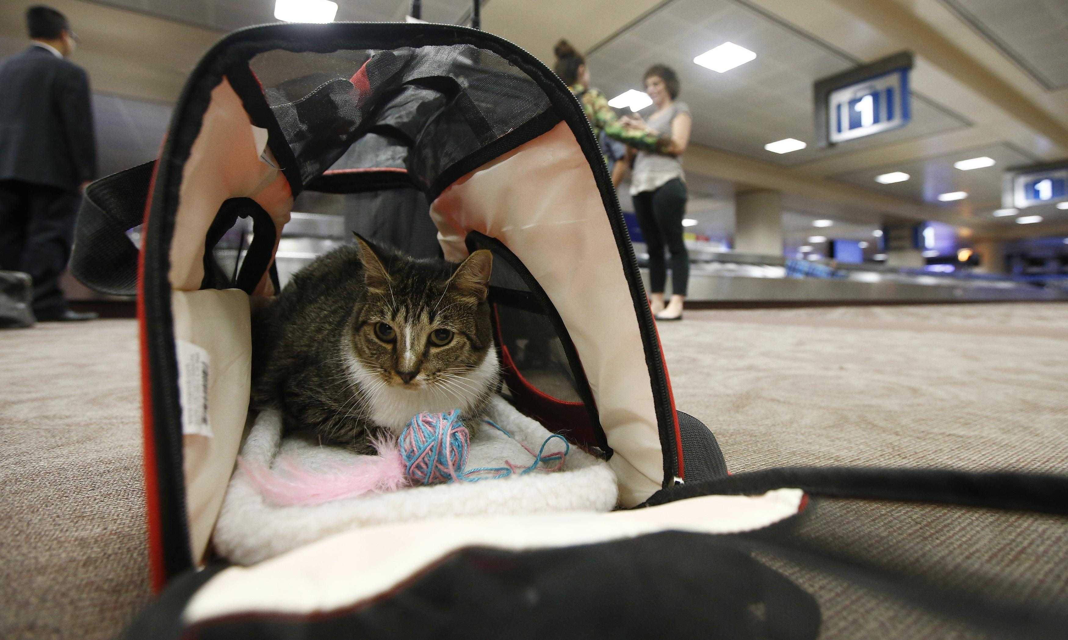 No more free rides: US seeks to limit emotional support animals on planes
