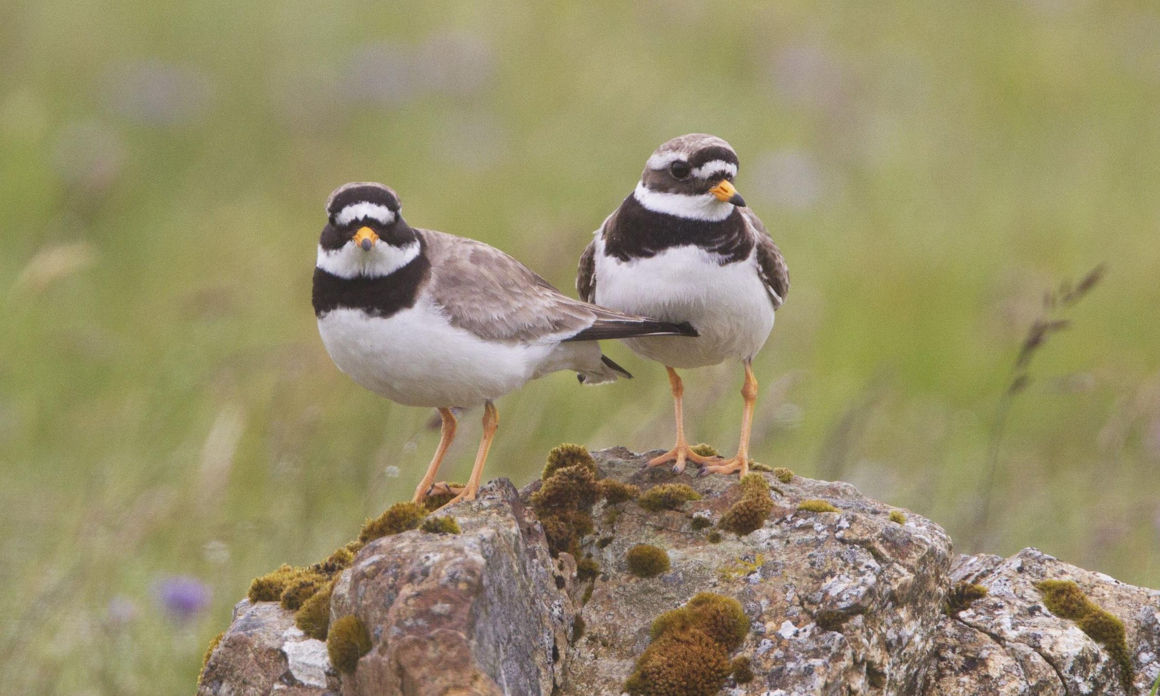 Birdwatch: shore things – getting close to waders on their migration