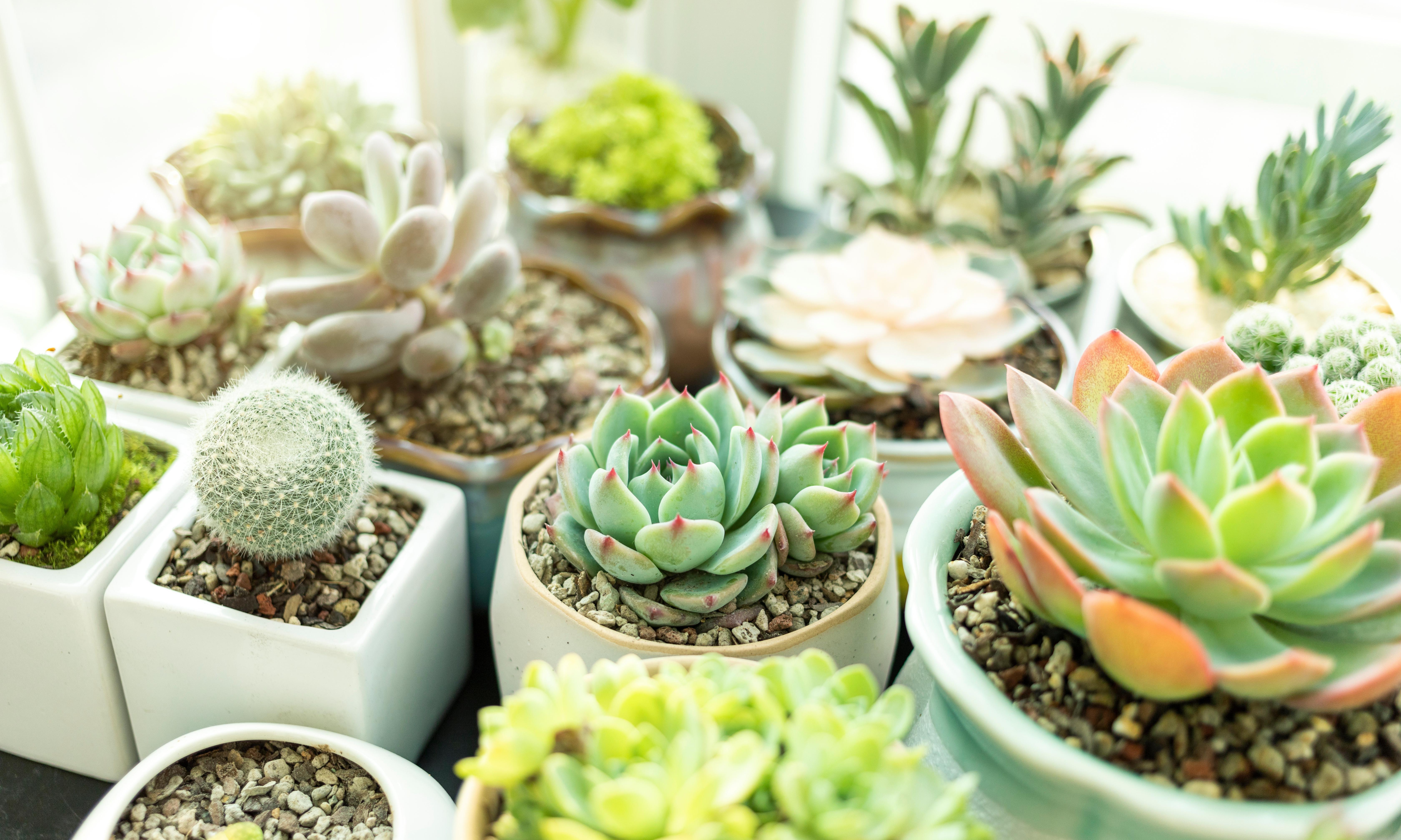 How to tend indoor plants in winter