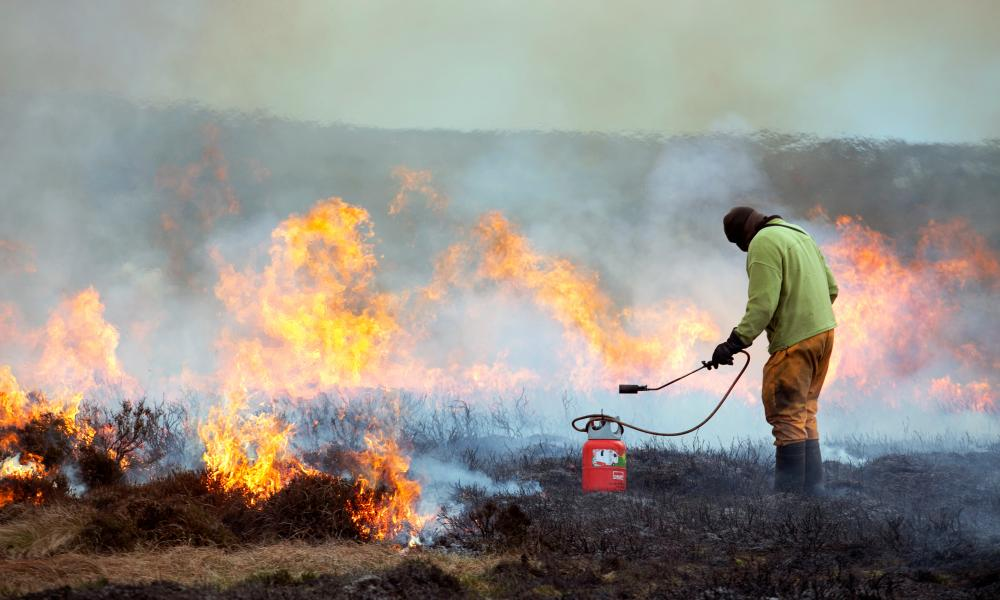 A gamekeeper on Bingley Moor in West Yorkshire using a 'weed wand' to burn heather in March.