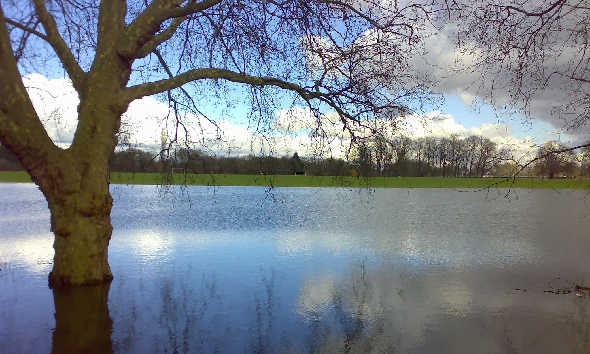 Rewilding project aims to give Thames its flood plain back