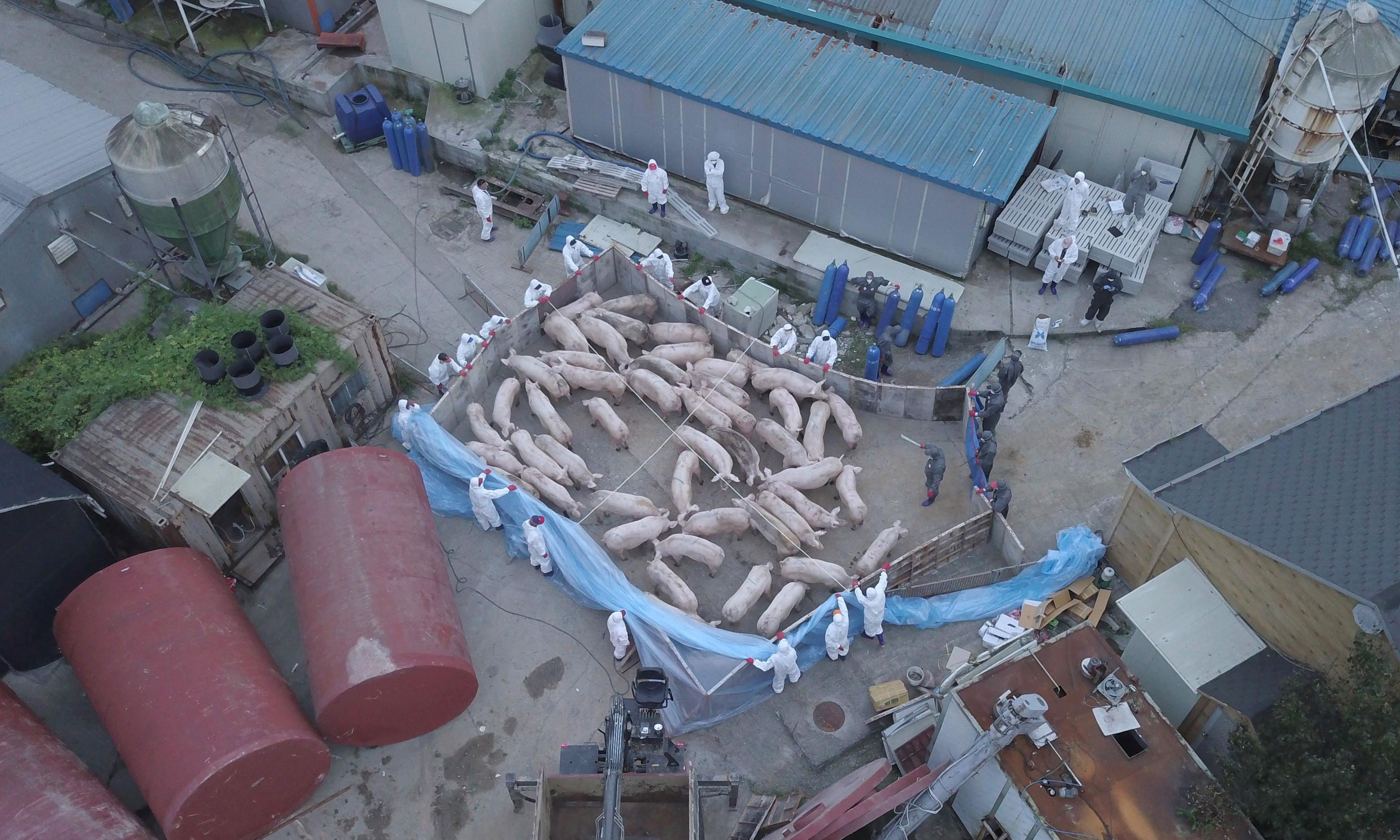 South Korea confirms African swine fever outbreak