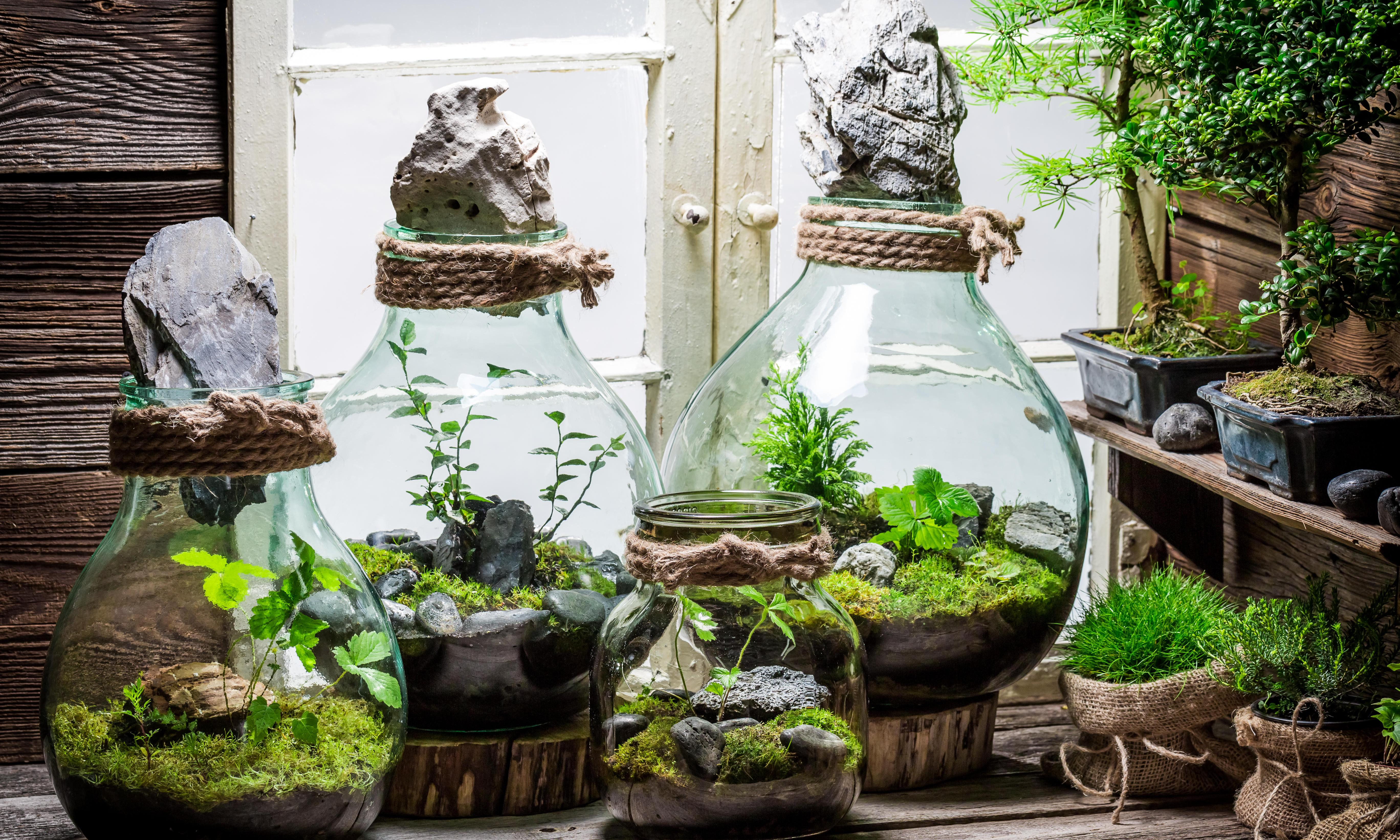 House plants: make your own miniature mossy world