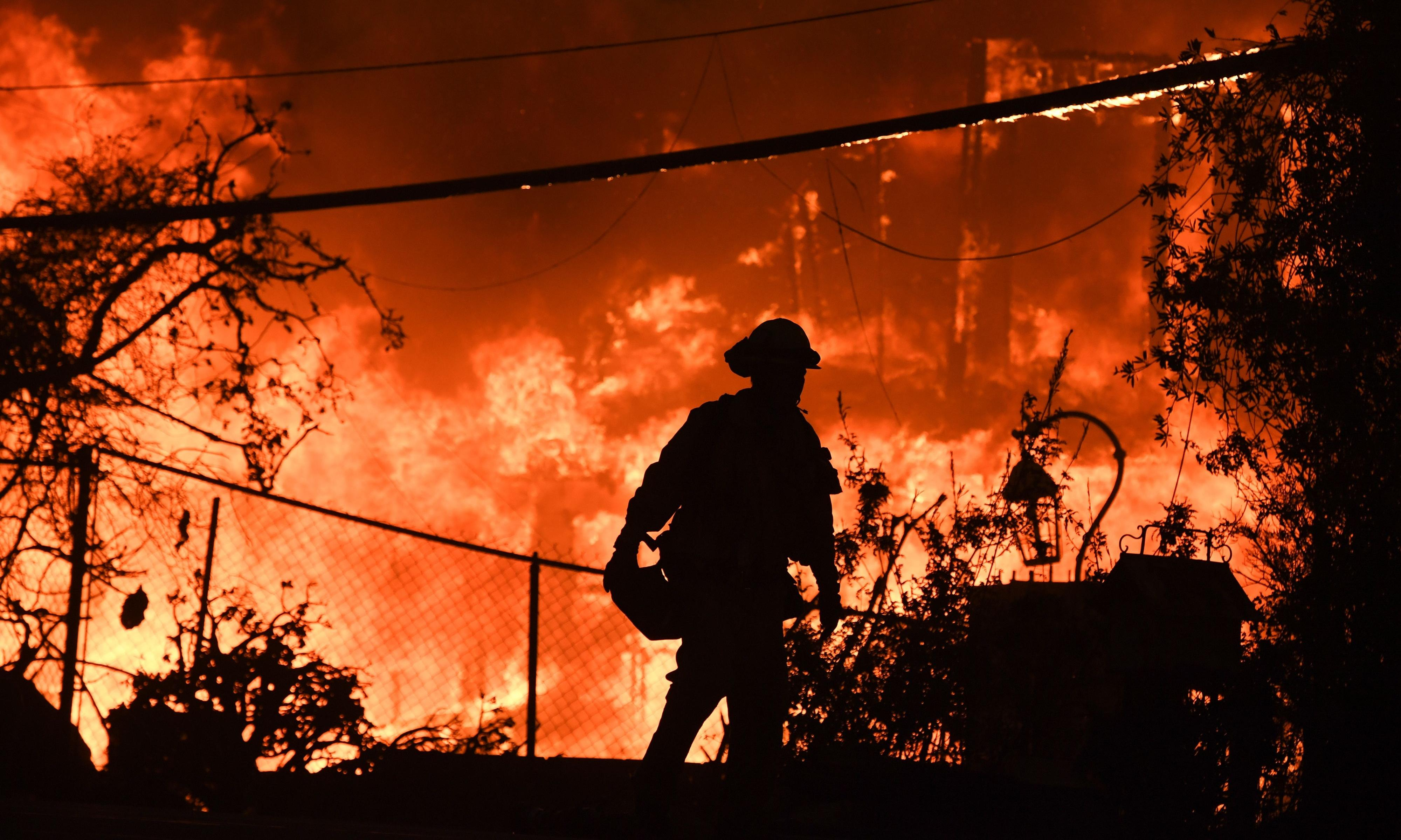 How to survive wildfires: let's do as nature does