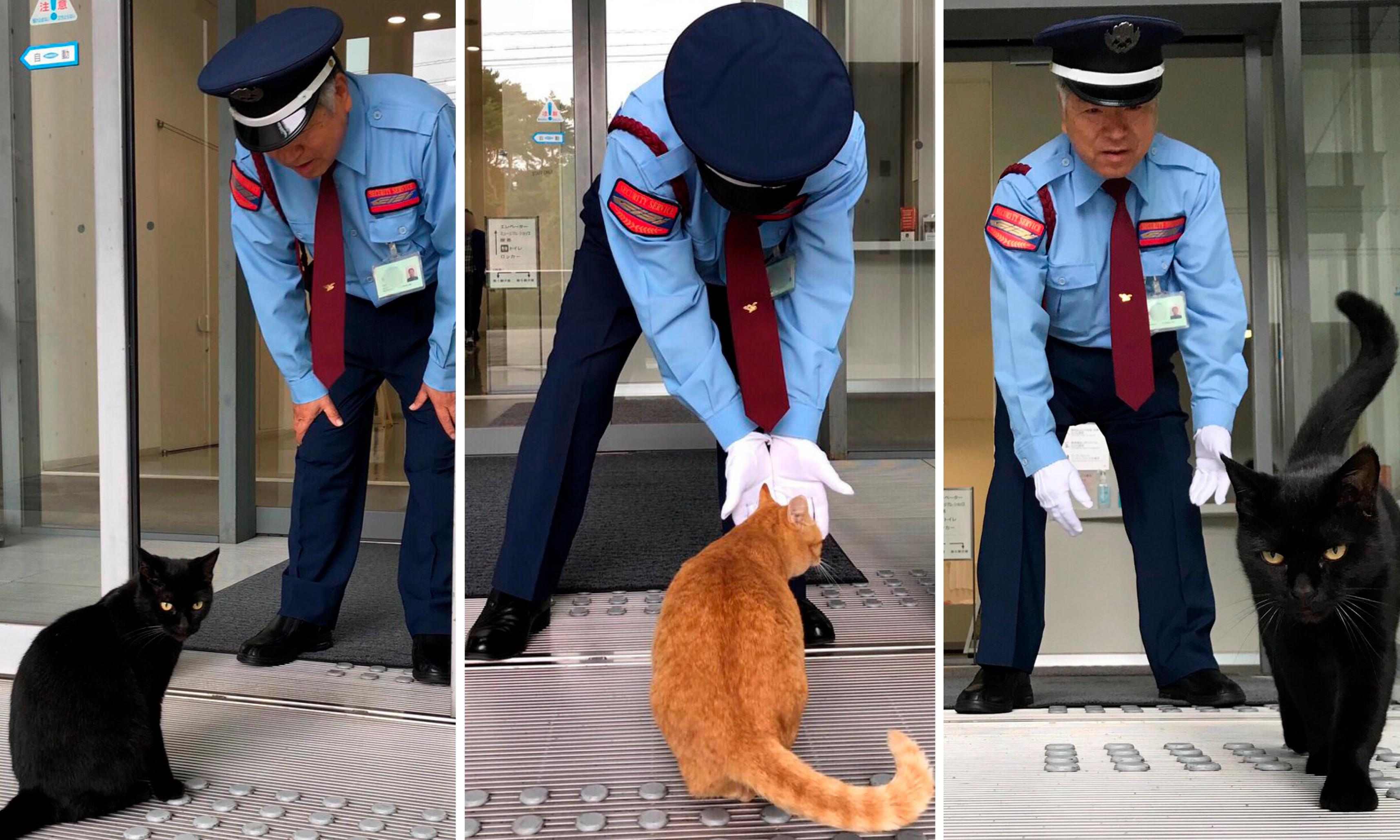 Curious cats bring fame to Japanese museum that won't let them in
