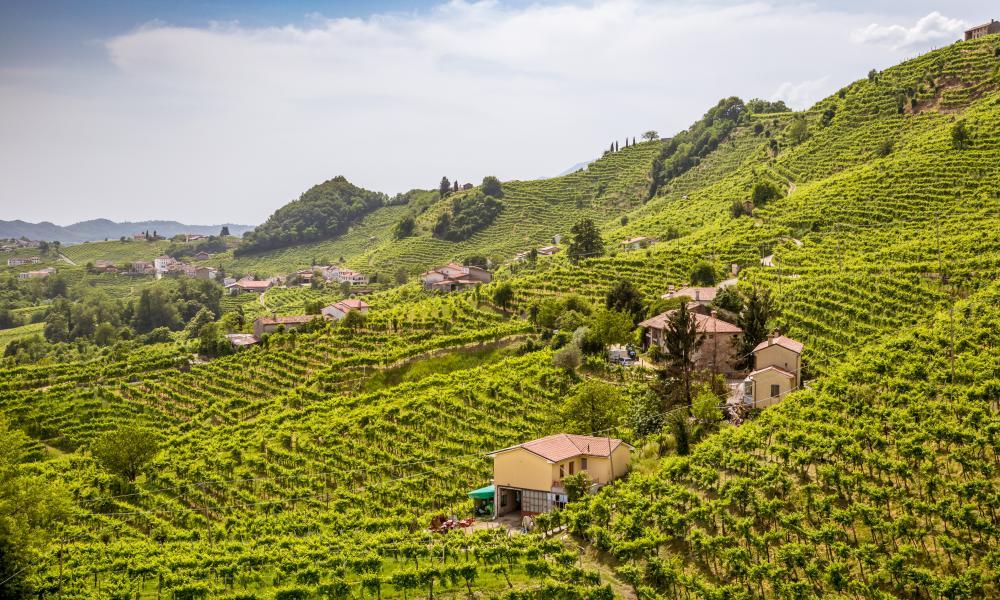 Panorama of vineyard country around Valdobbiadene