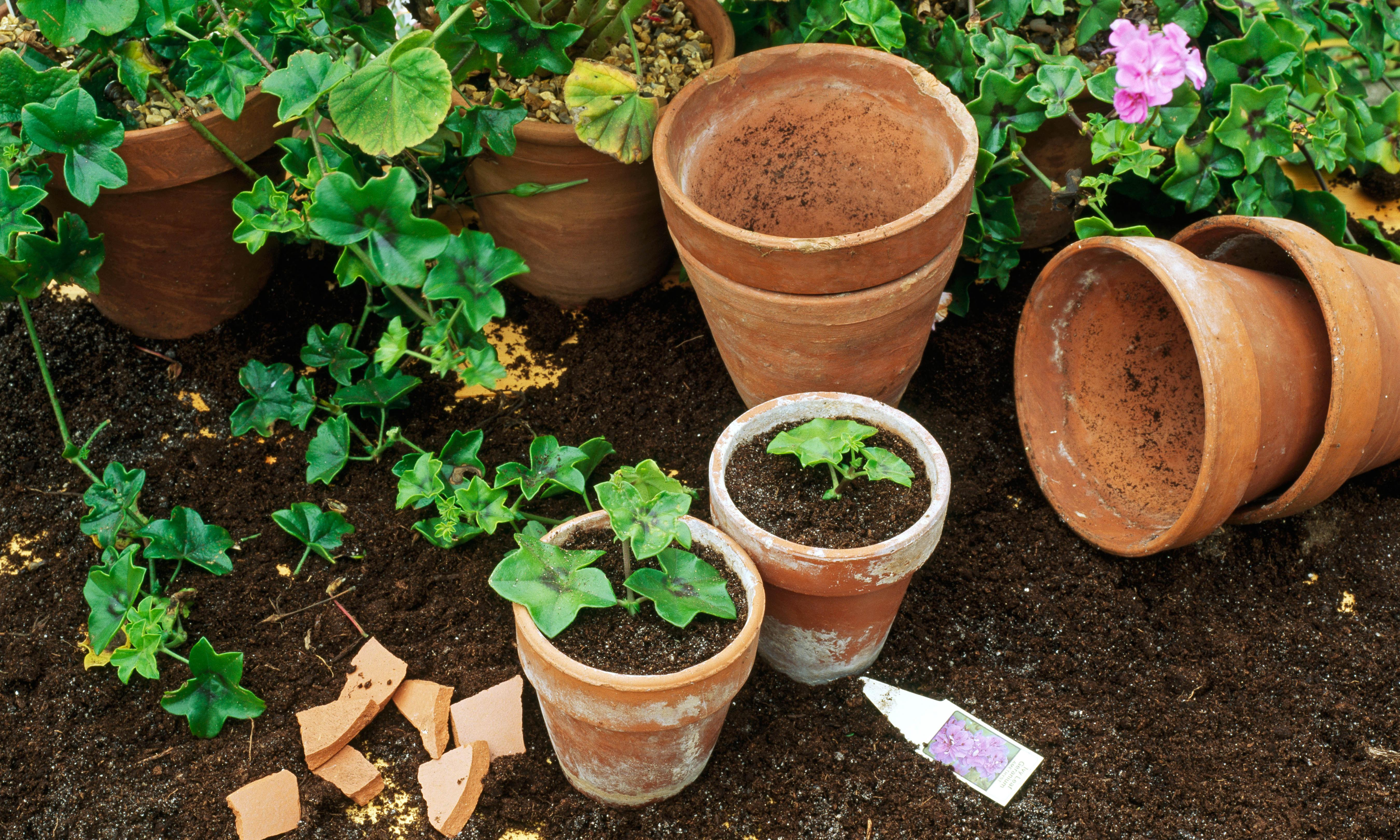 How to grow new plants from cuttings
