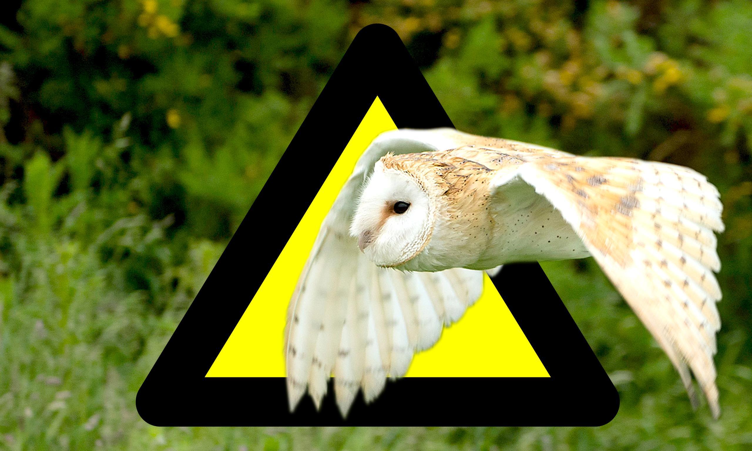 HS2 will destroy or damage hundreds of UK wildlife sites, says report