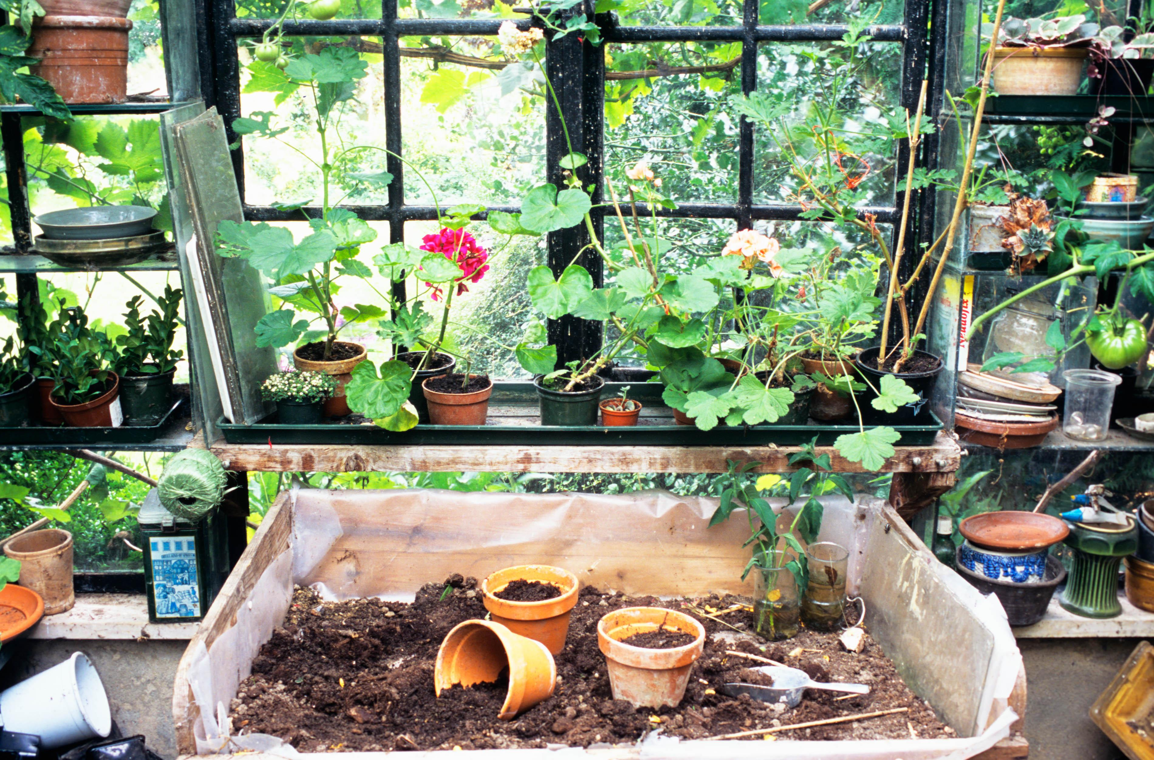 How to reuse old compost