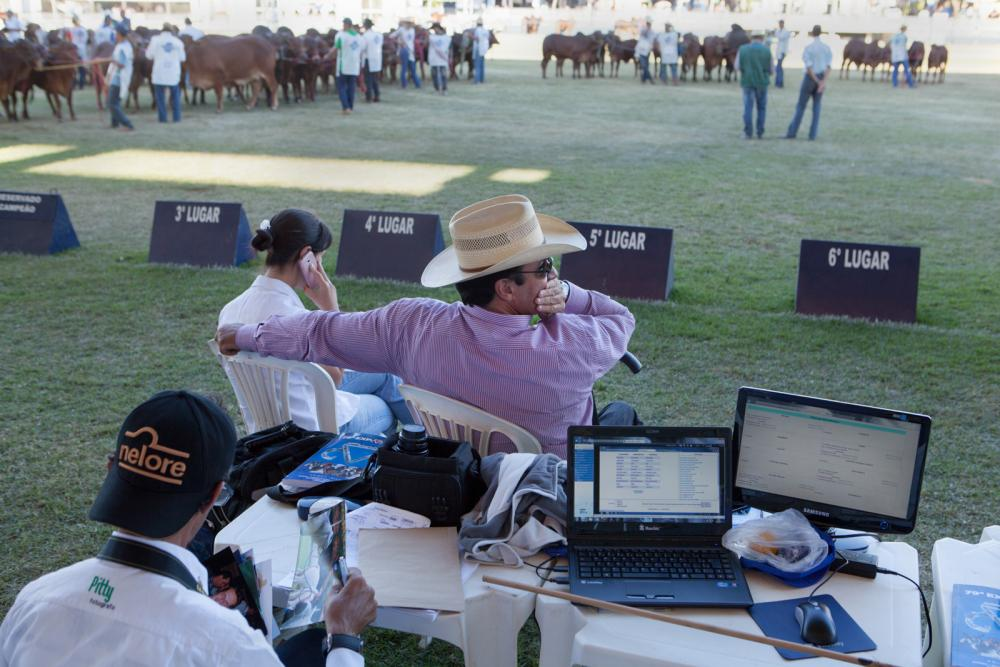 Mario Marcio, the then president of the animal judging rink at Expozebu, observes the track and animals. Nearly 2000 animals were registered at Expozebu in 2017 and the judging panel welcomes and rewards animals that present better quality and physical size. Uberaba, Brazil, 2013