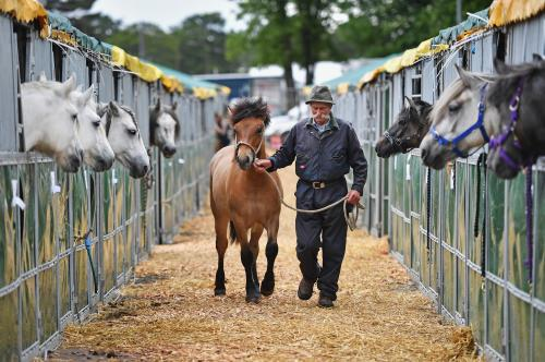 Highland pony breeder Robert Davidson prepares for the Royal Highland show at Ingliston showground