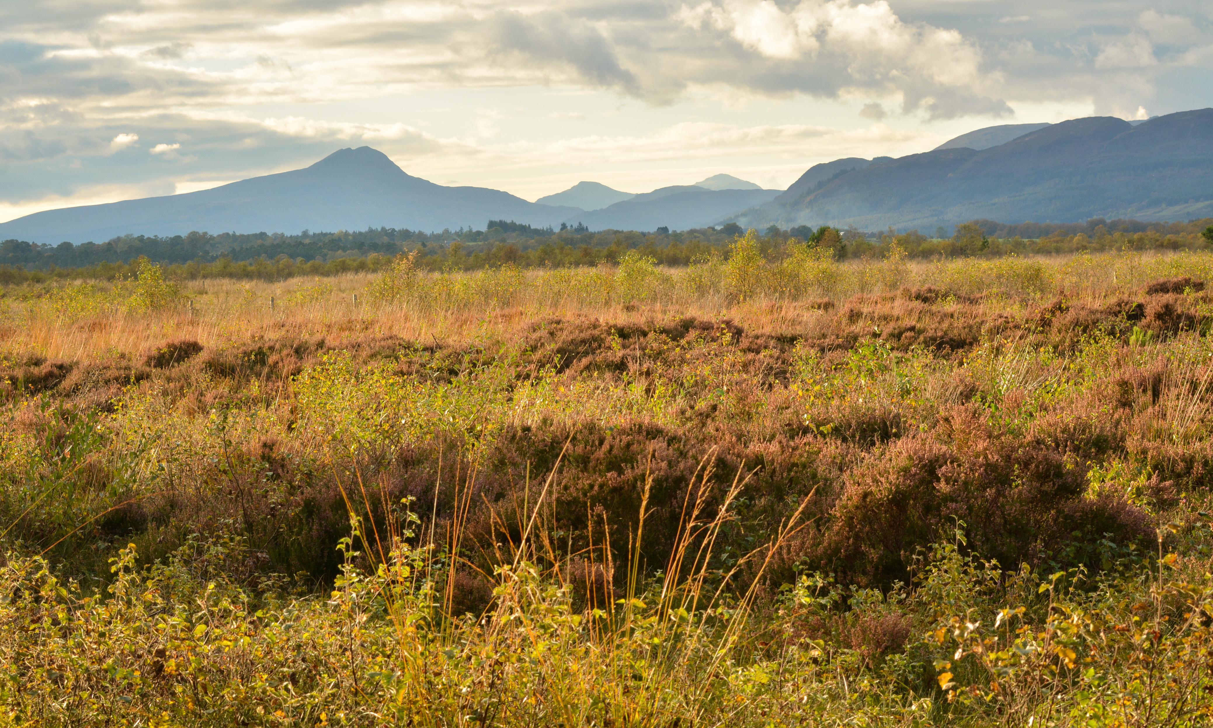 Specieswatch: the 'UK rainforest' threatened by gardeners