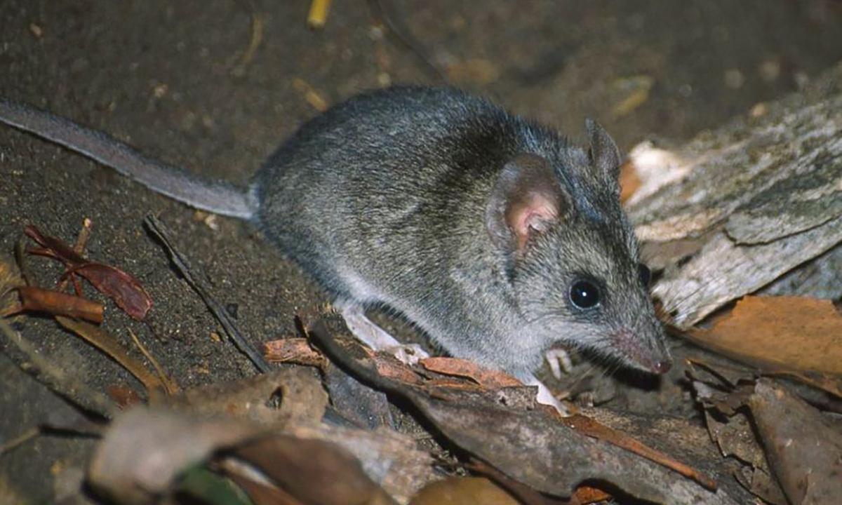 More than 100 threatened species hit hard by Australian bushfires, pushing many towards extinction