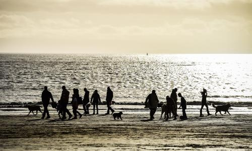 Dogs and their owners gather on the beach at Barry Island, Wales, as December temperatures continue to be mild