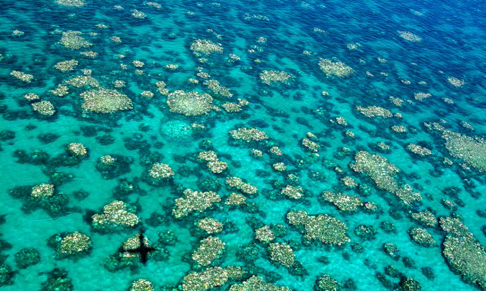 The reef from the air