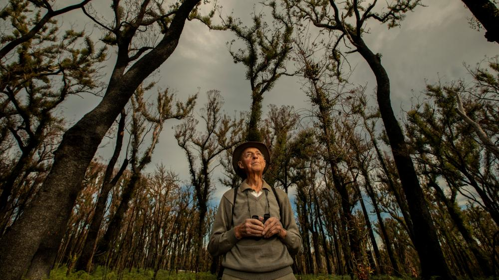 Bob Semmens checks for birds in one of the burnt coast forests where he has been conducting bird surveys for decades.
