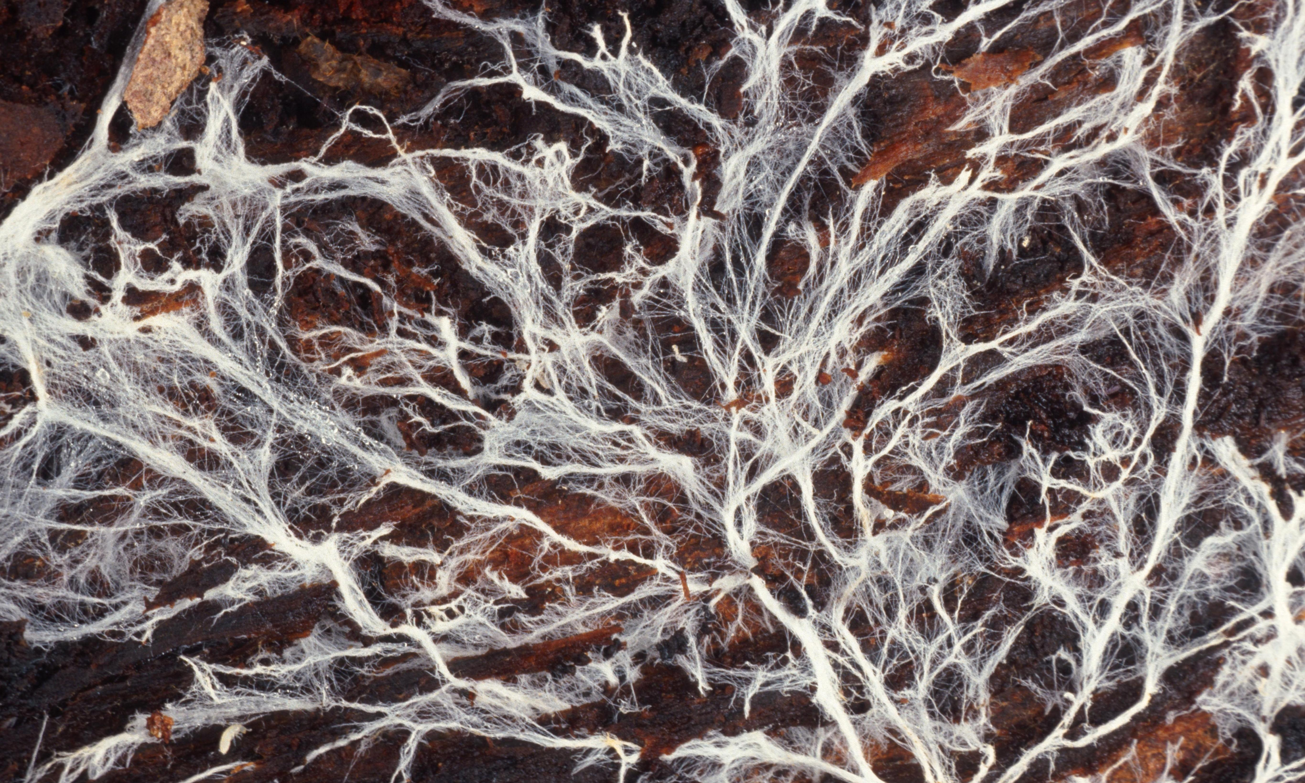 Strangest things: fossils reveal how fungus shaped life on Earth