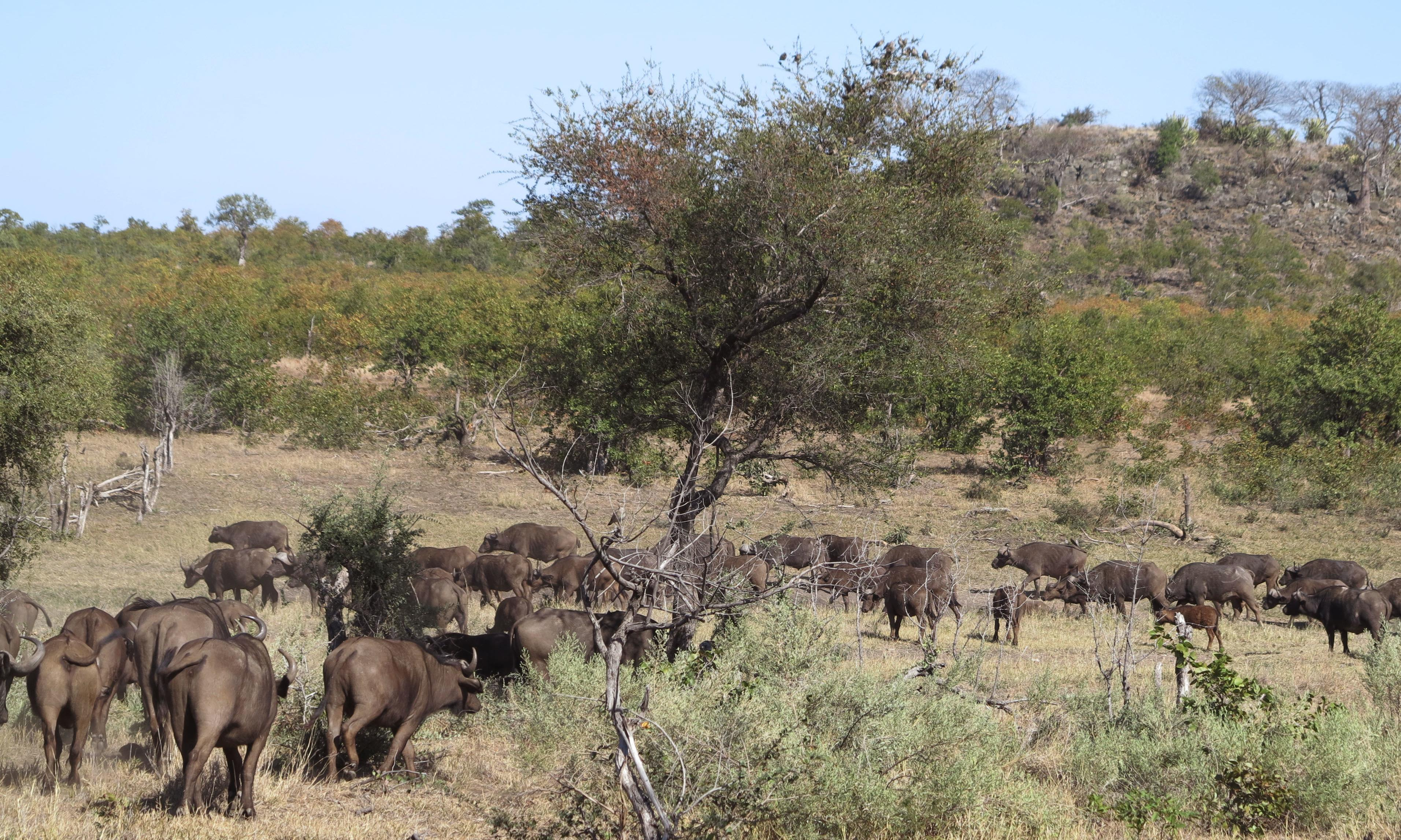 South African national park to kill animals in response to severe drought
