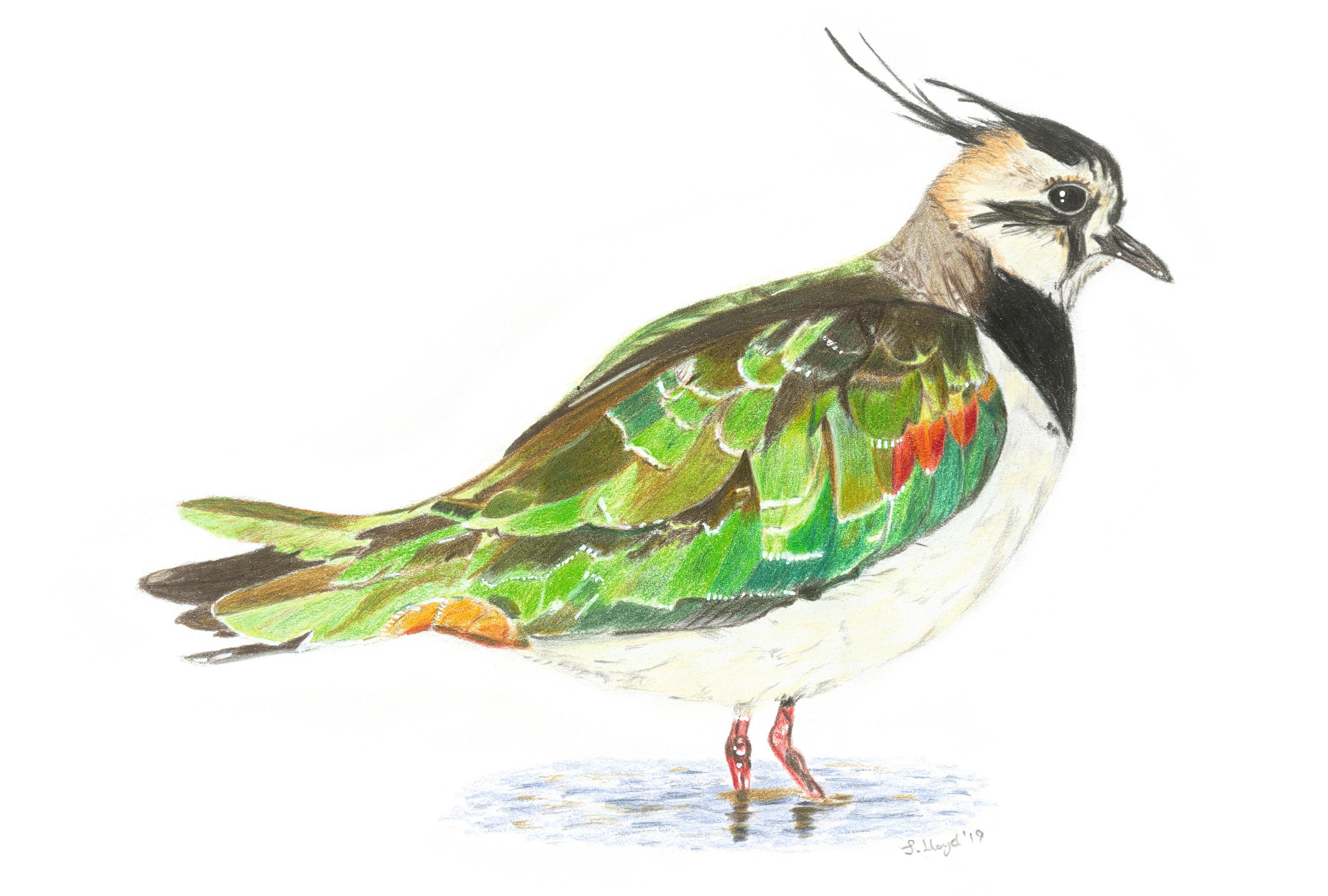 Writers and scientists celebrate UK's 67 most endangered birds