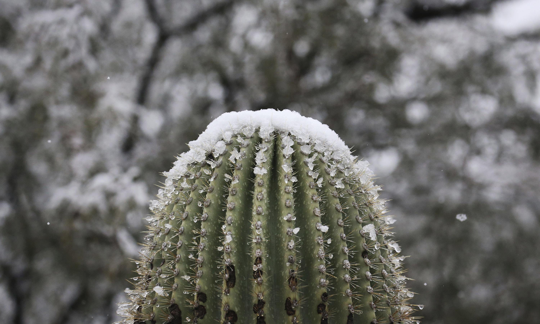 Record-breaking winter storm blankets Arizona in snow