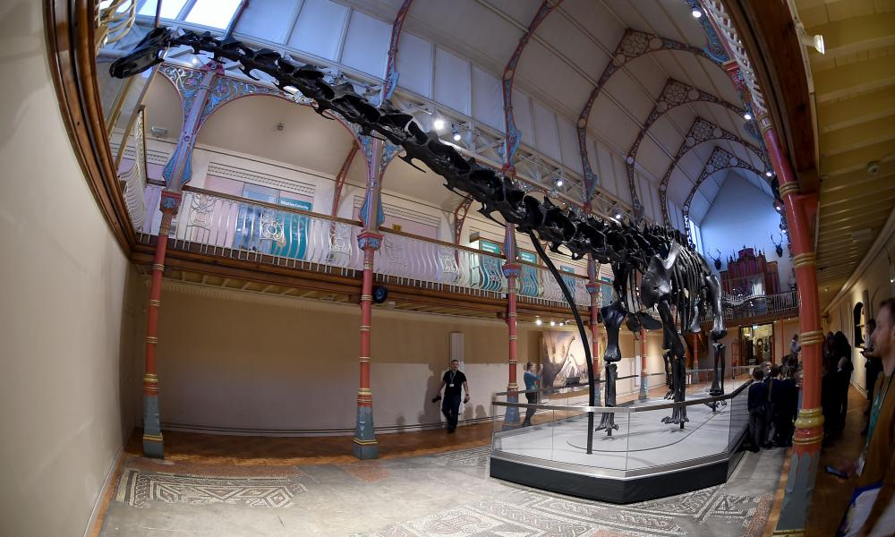 Dippy the dinosaur's skeleton is made up of 292 bones