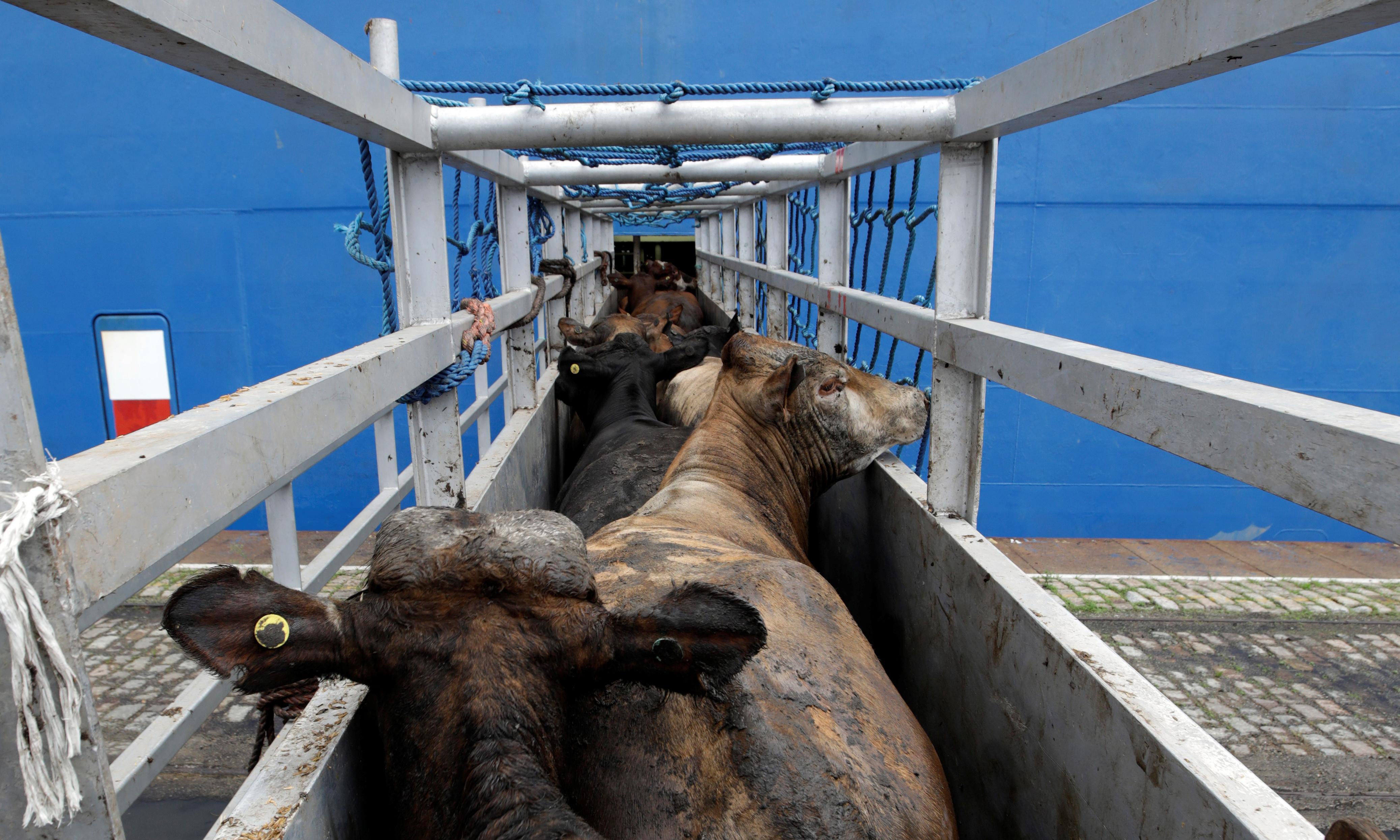Ireland revokes licence of livestock ship operator over low performance rating