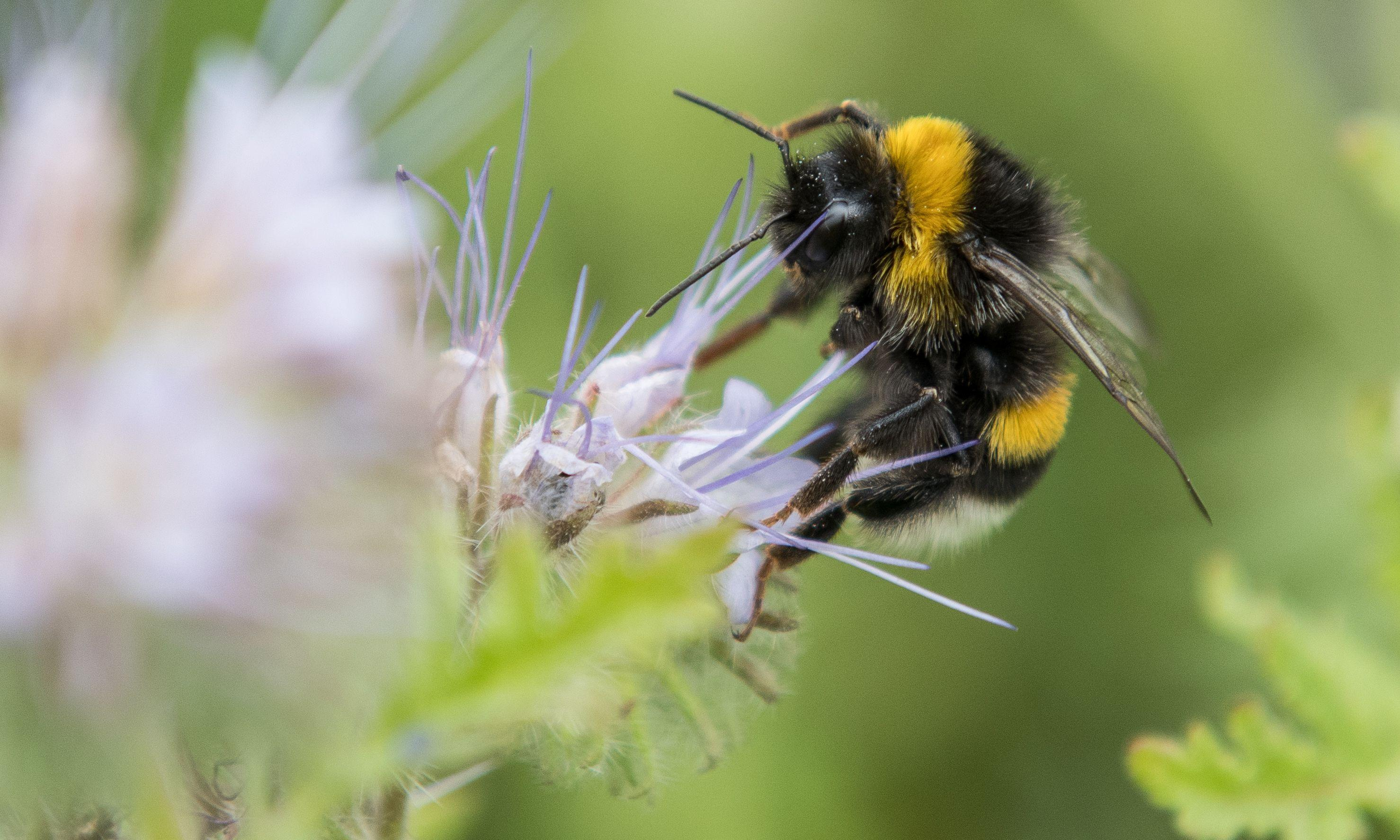 Developers may have to enhance wildlife habitats, says Gove