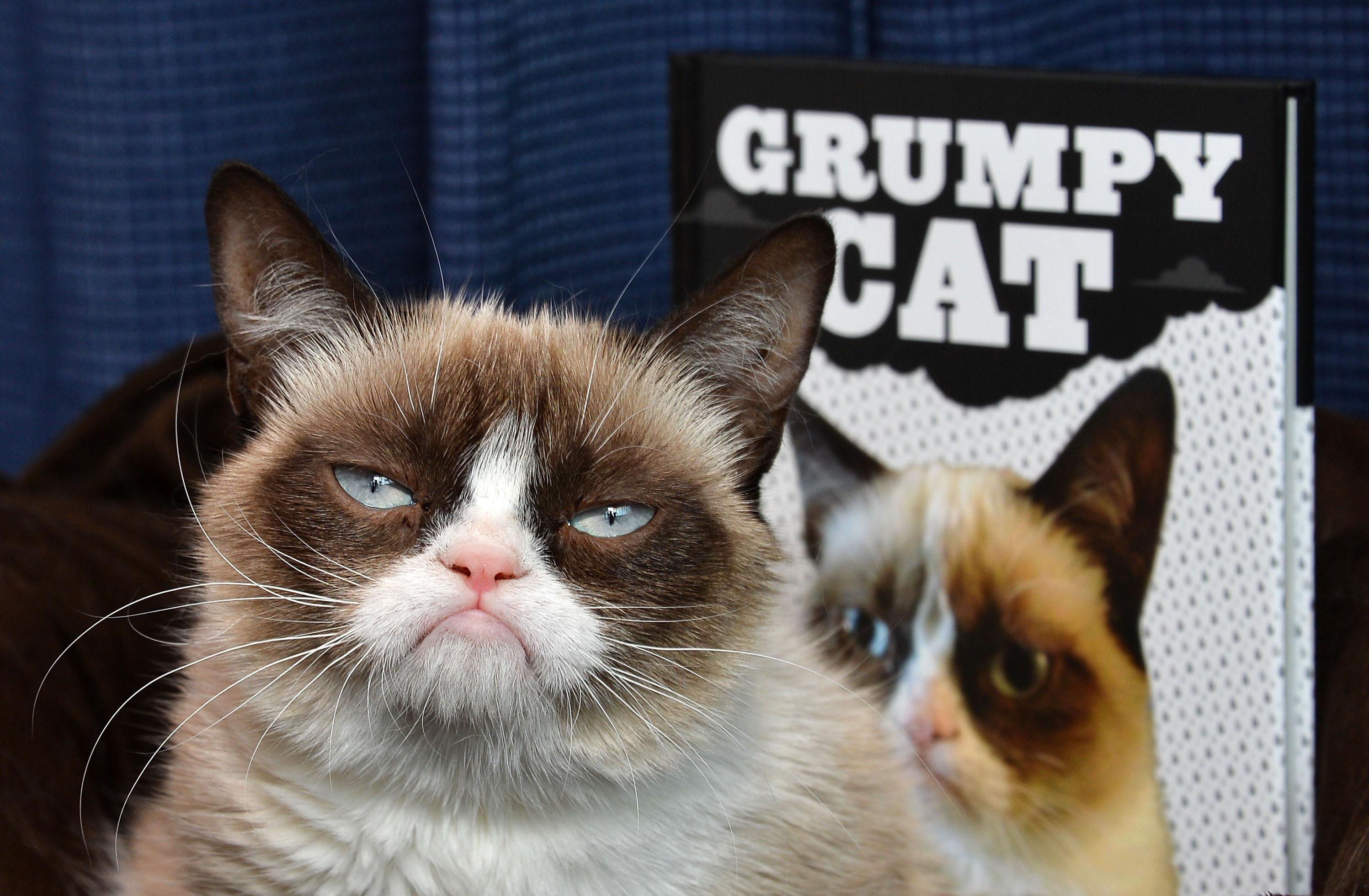 Grumpy Cat dies aged seven: 'Some days are grumpier than others'