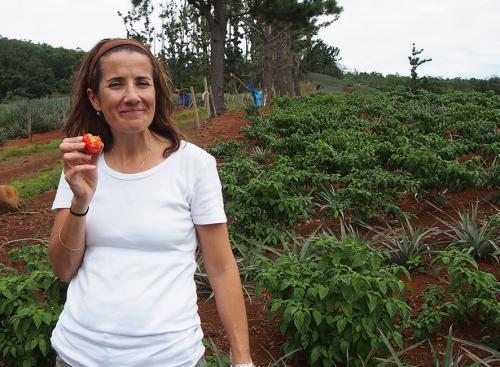 Researcher Tara McKenzie with a rejected tomato on a Bundaberg farm