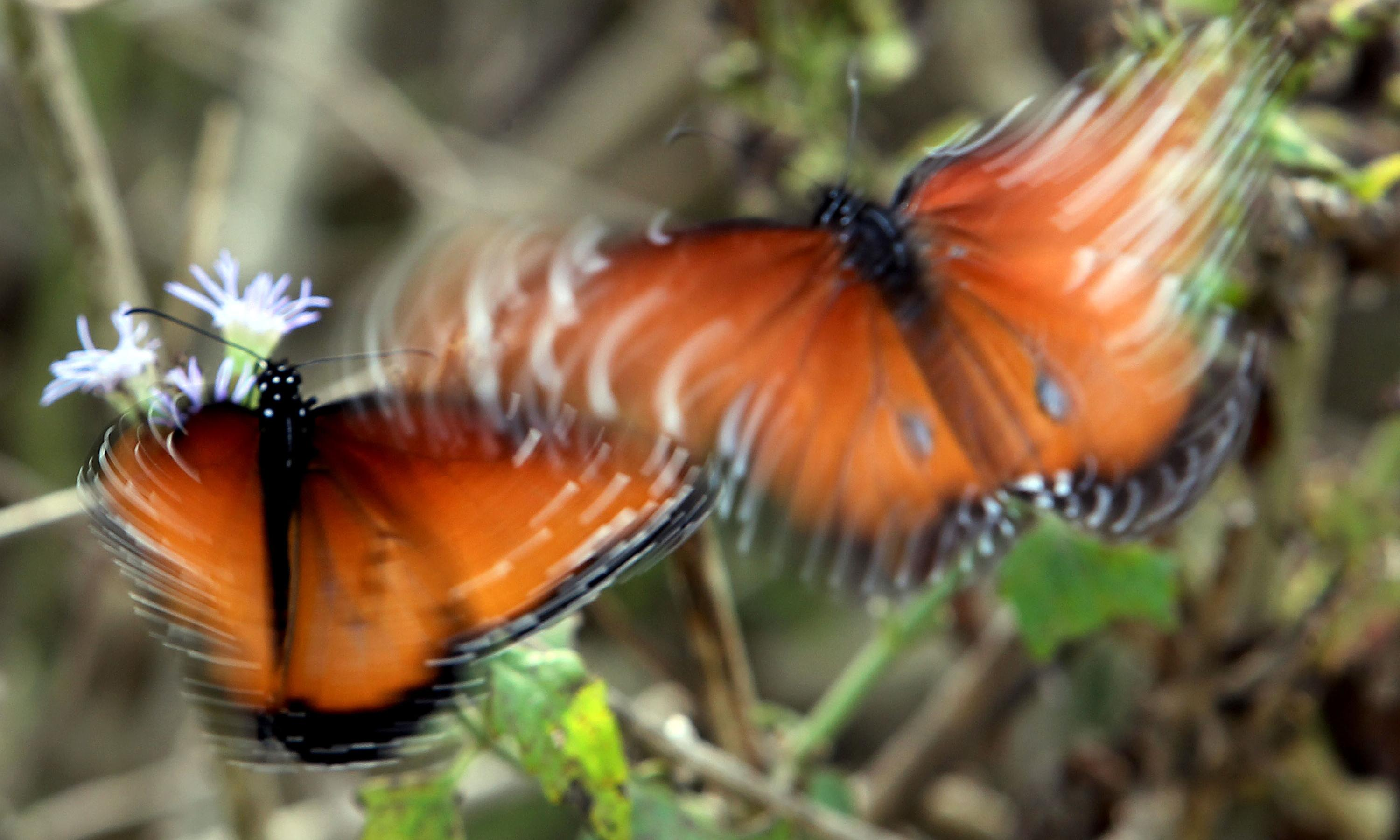 Trump supporters' private border wall blocked due to concern for butterflies