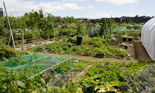 growing together – an allotment picture essay | life and style | the