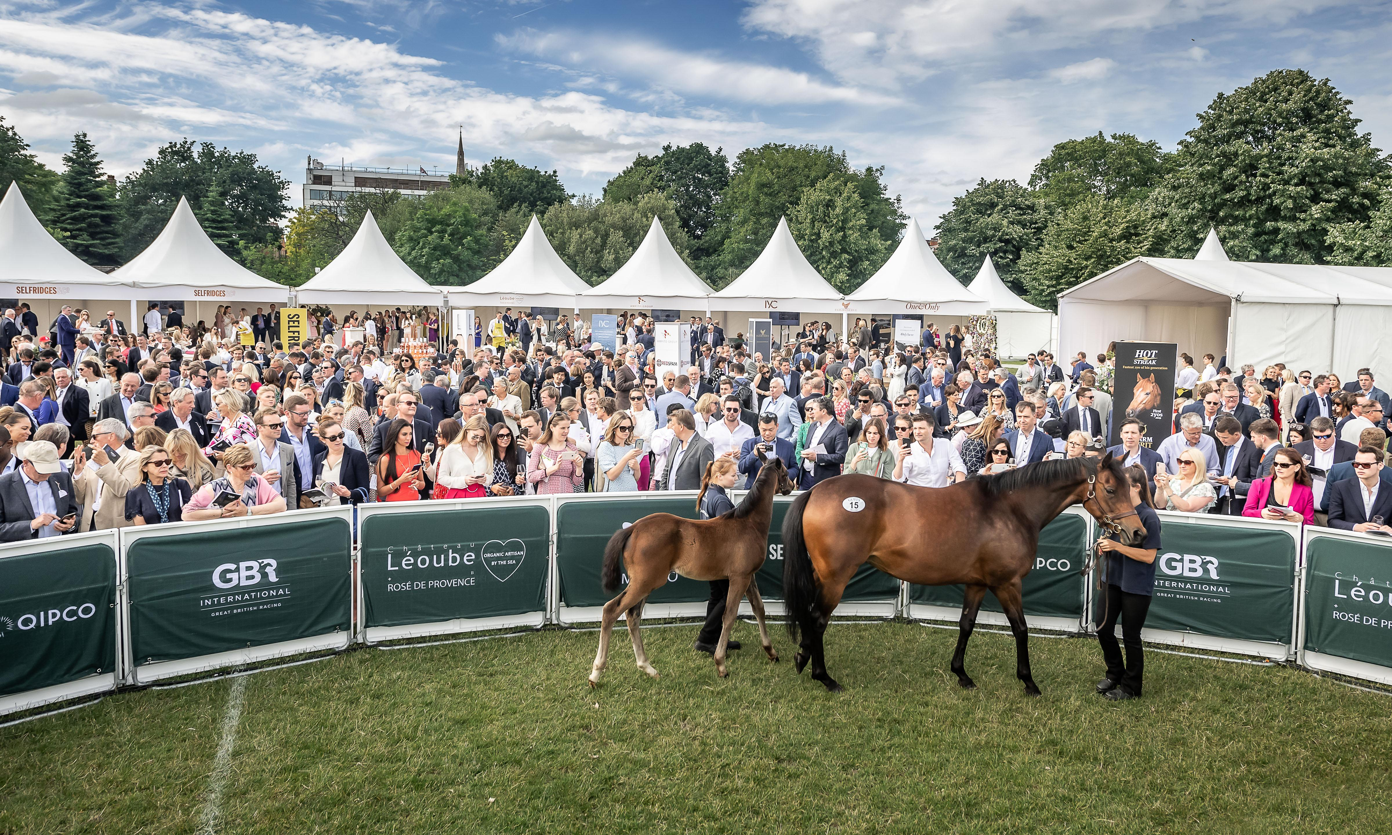 The racehorse auction in Prince William's garden where millions change hands
