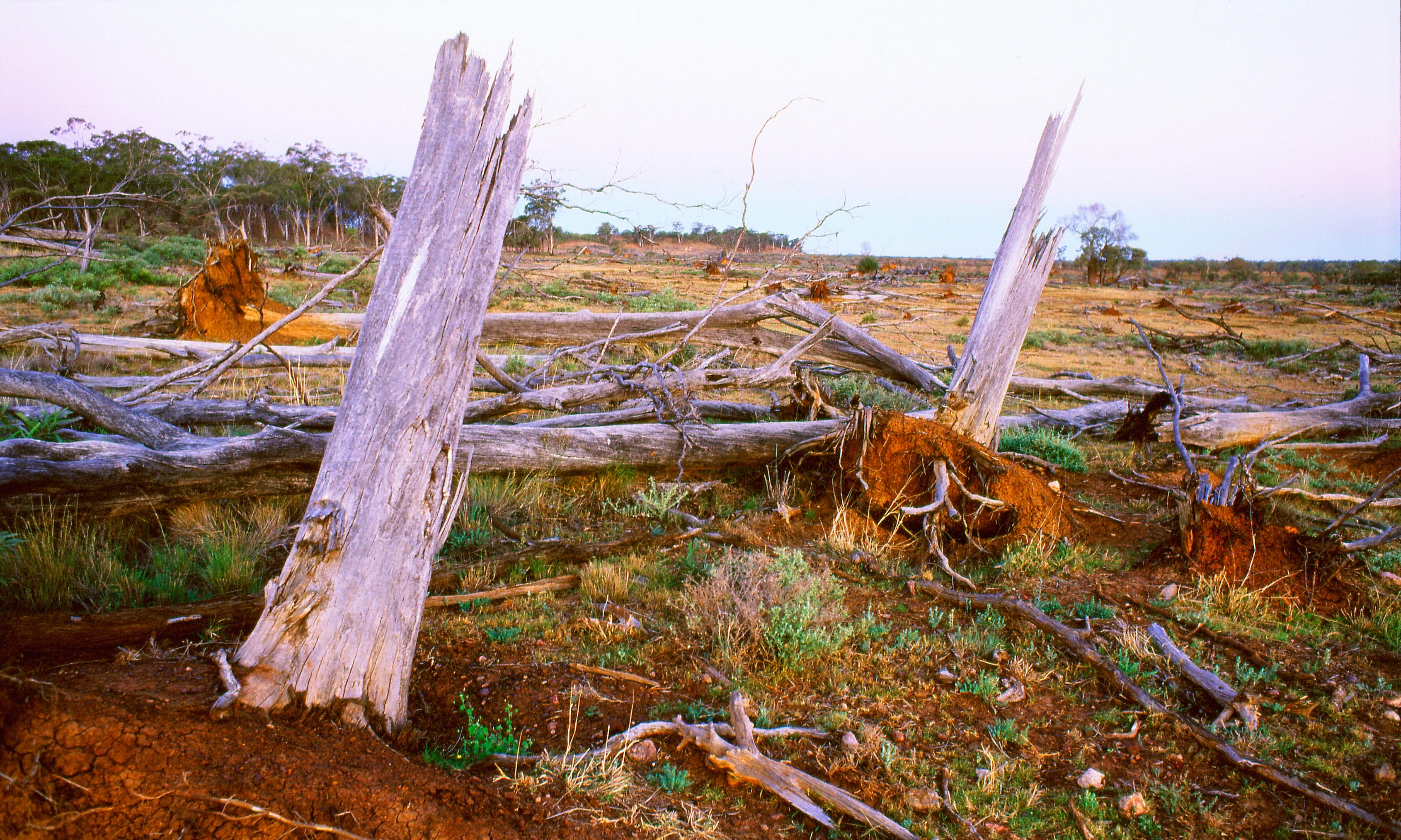 Australia cleared 7.7m hectares of threatened species habitat since introduction of environment act