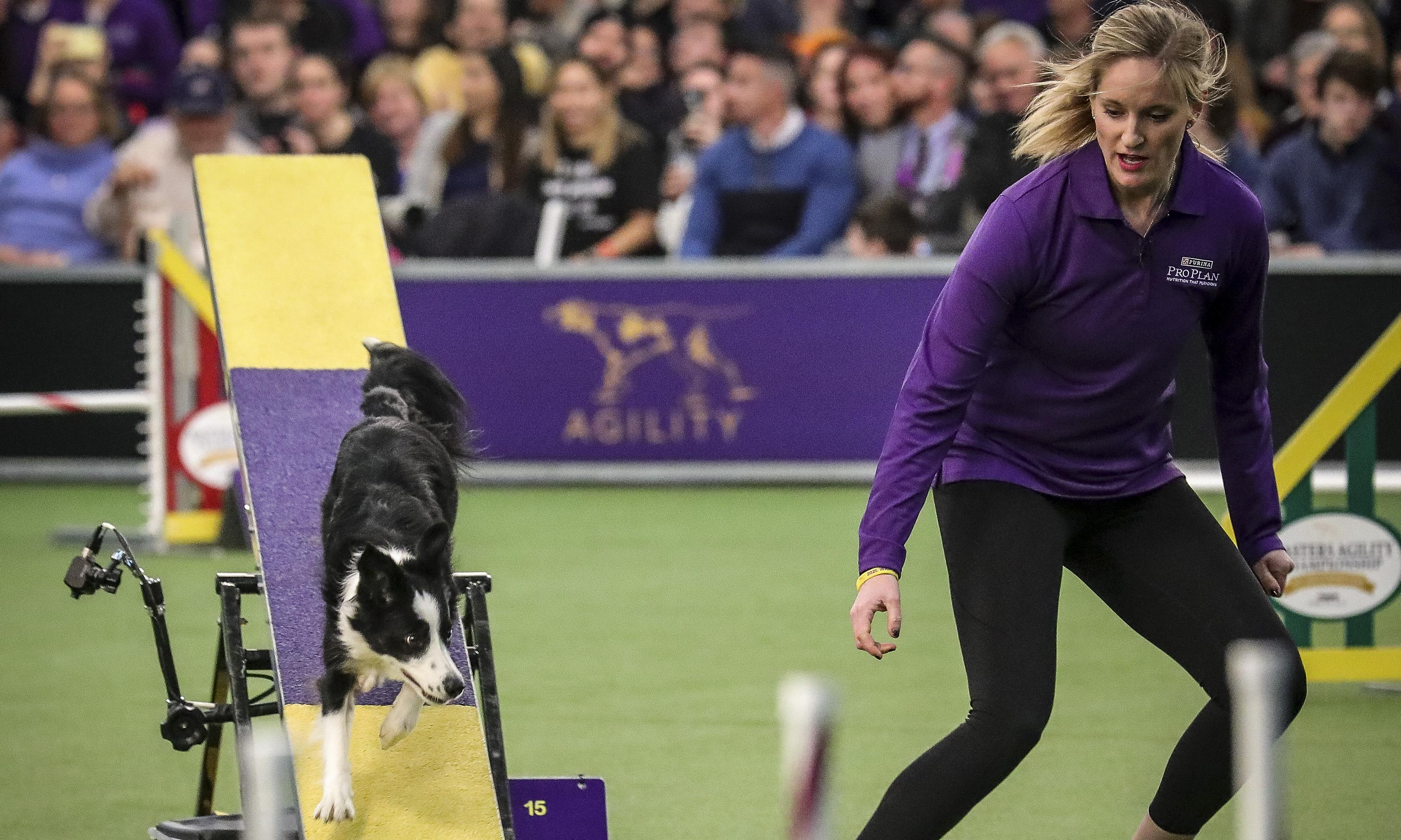 The queens of agility: America's most famous canine athletes race for glory