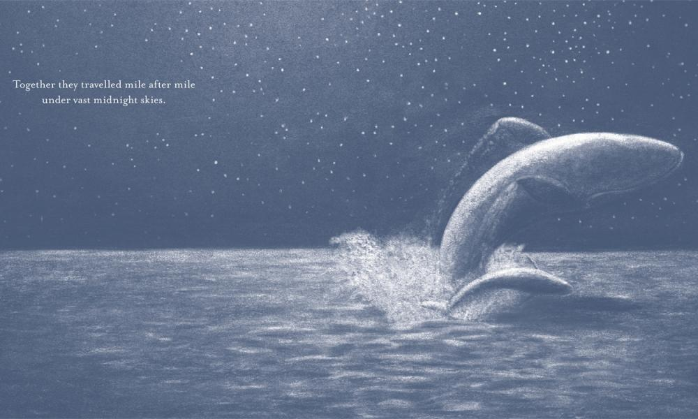 Little Whale by Jo Weaver
