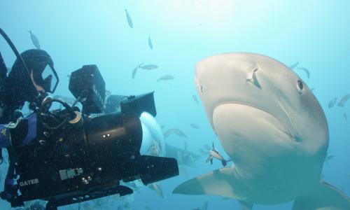 Sharkwater: Extinction review – an eco-doc with bite and poignancy