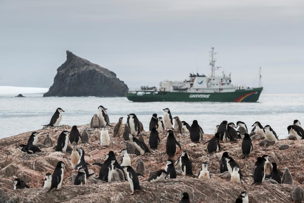 A Chinstrap penguin colony on Elephant Island, with the Esperanza in the background.