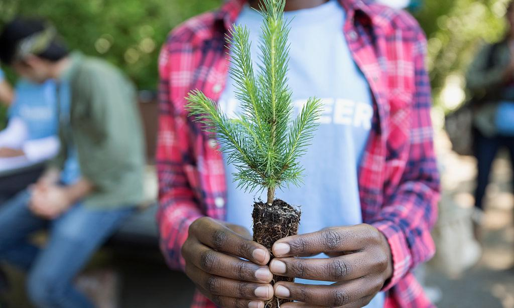 Climate crisis, tree planting and new left economics