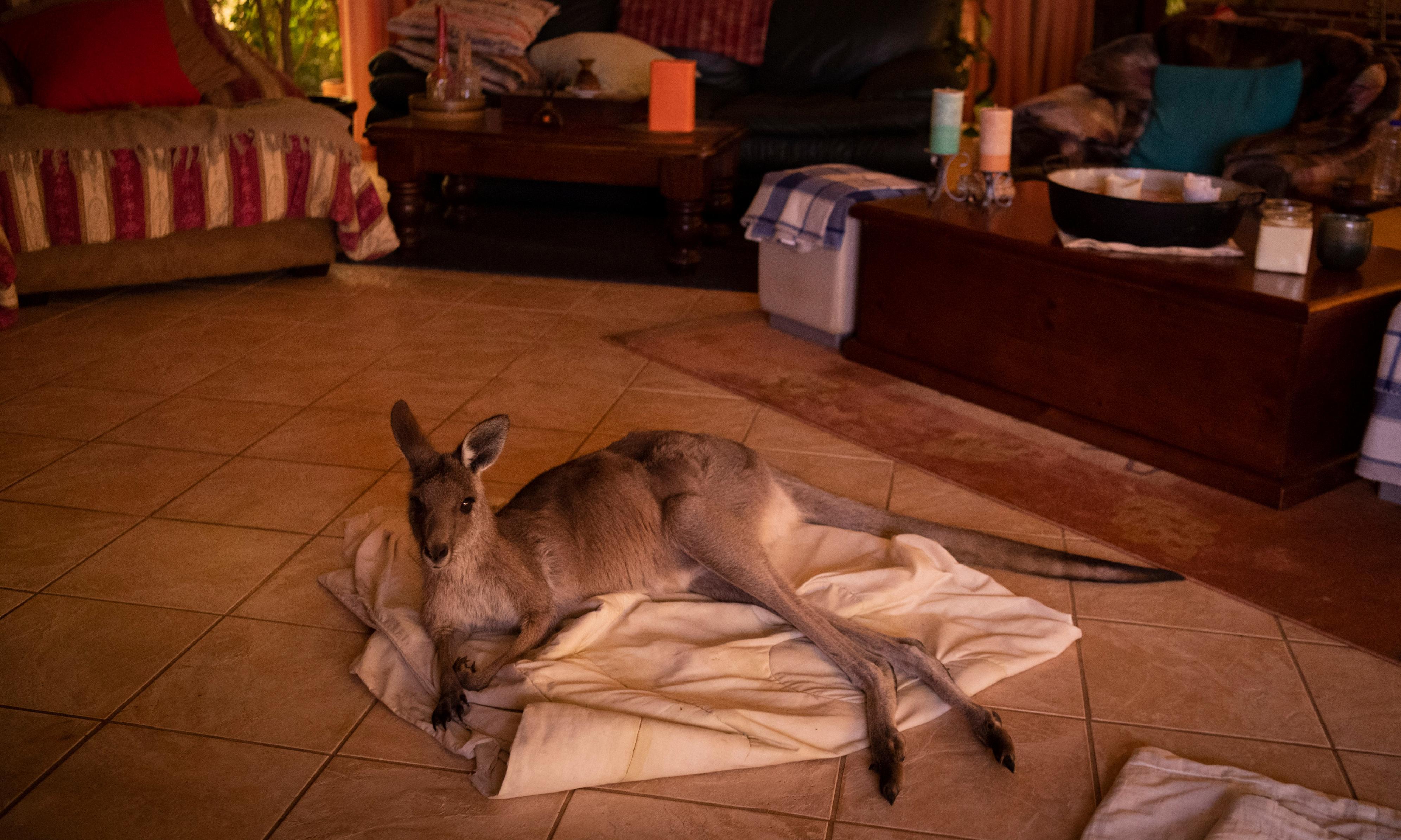 Heartbreaking and heartwarming: animals rescued from Australia's bushfires devastation