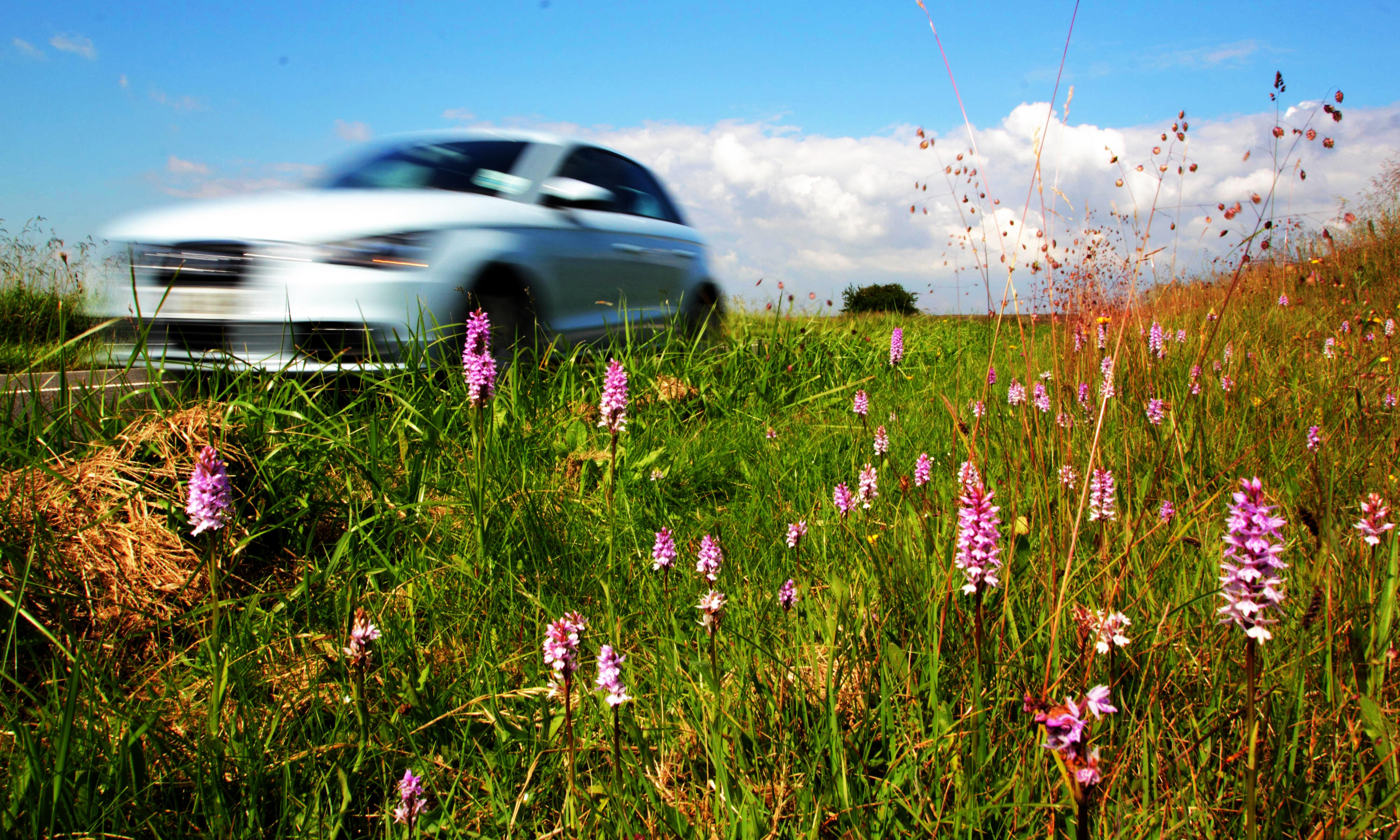 Plantwatch: life on the verge for Britain's roadside wildflowers