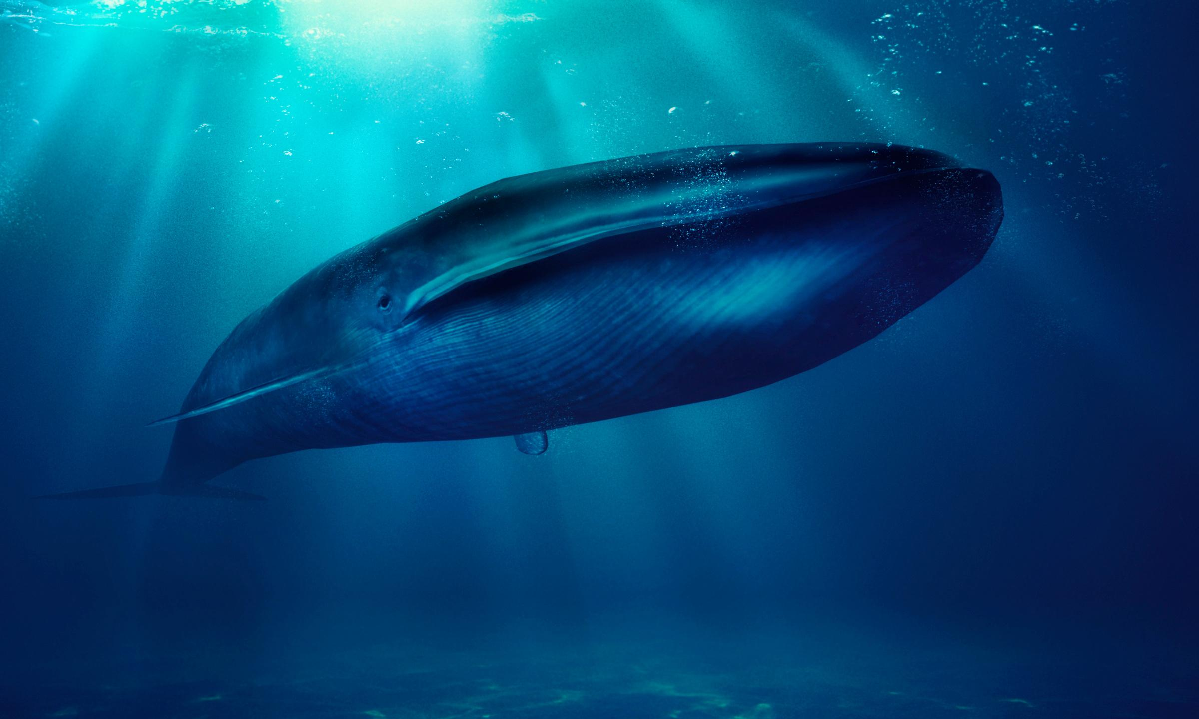 Scientists prepare for 'the most detailed whale poo expedition ever'