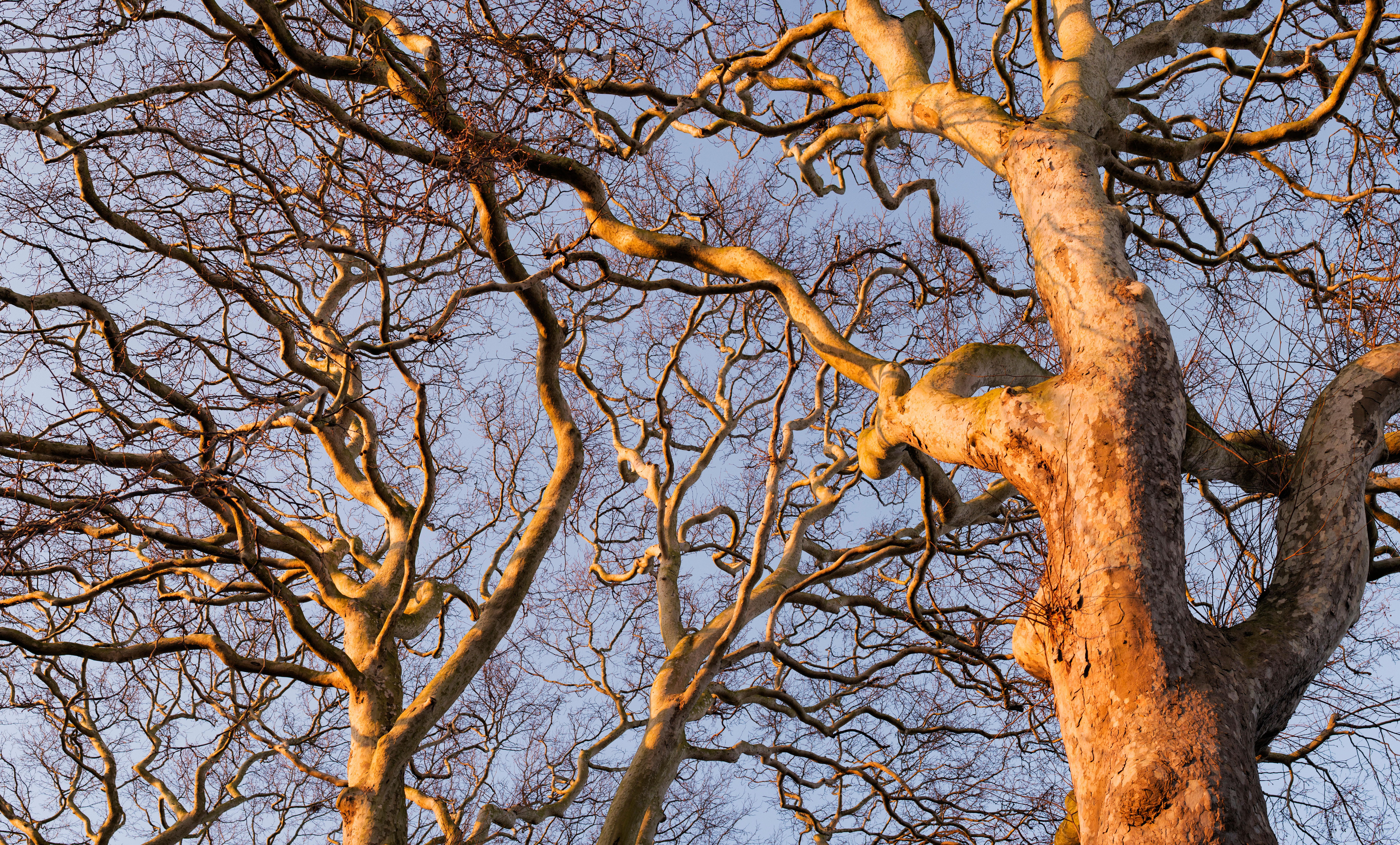Ghost Trees by Bob Gilbert review – an urban botanical sleuth