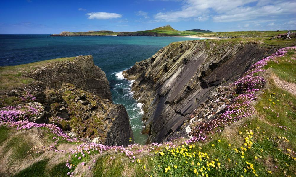 Wildflowers on the cliffs of Pembrokeshire coast path near St Davids.