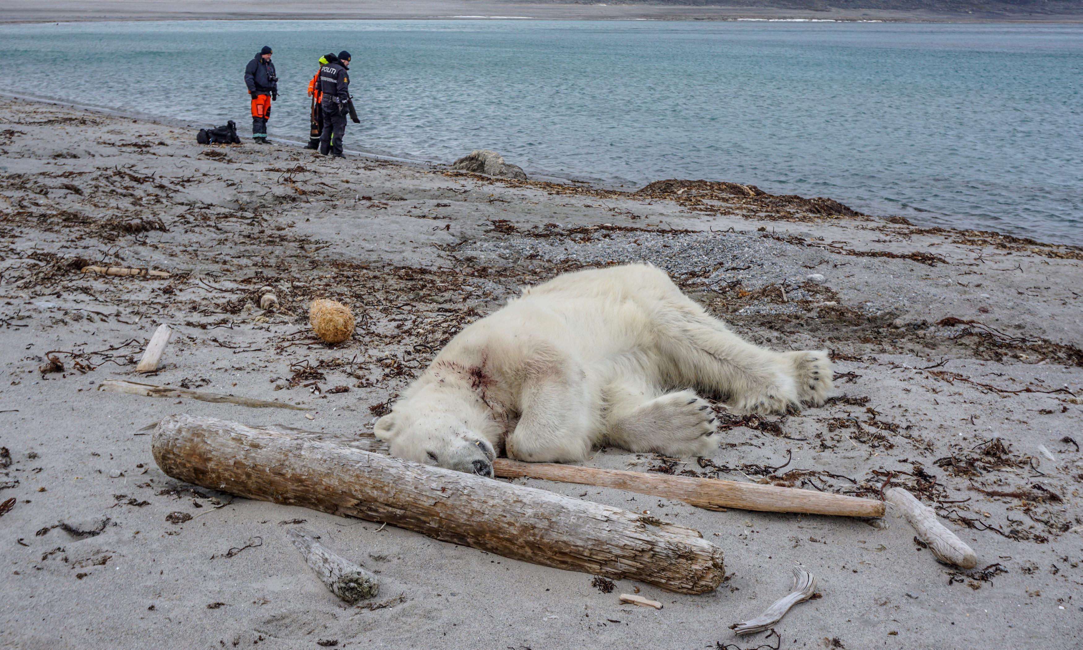 Arctic cruise ship guard shoots polar bear dead for injuring colleague