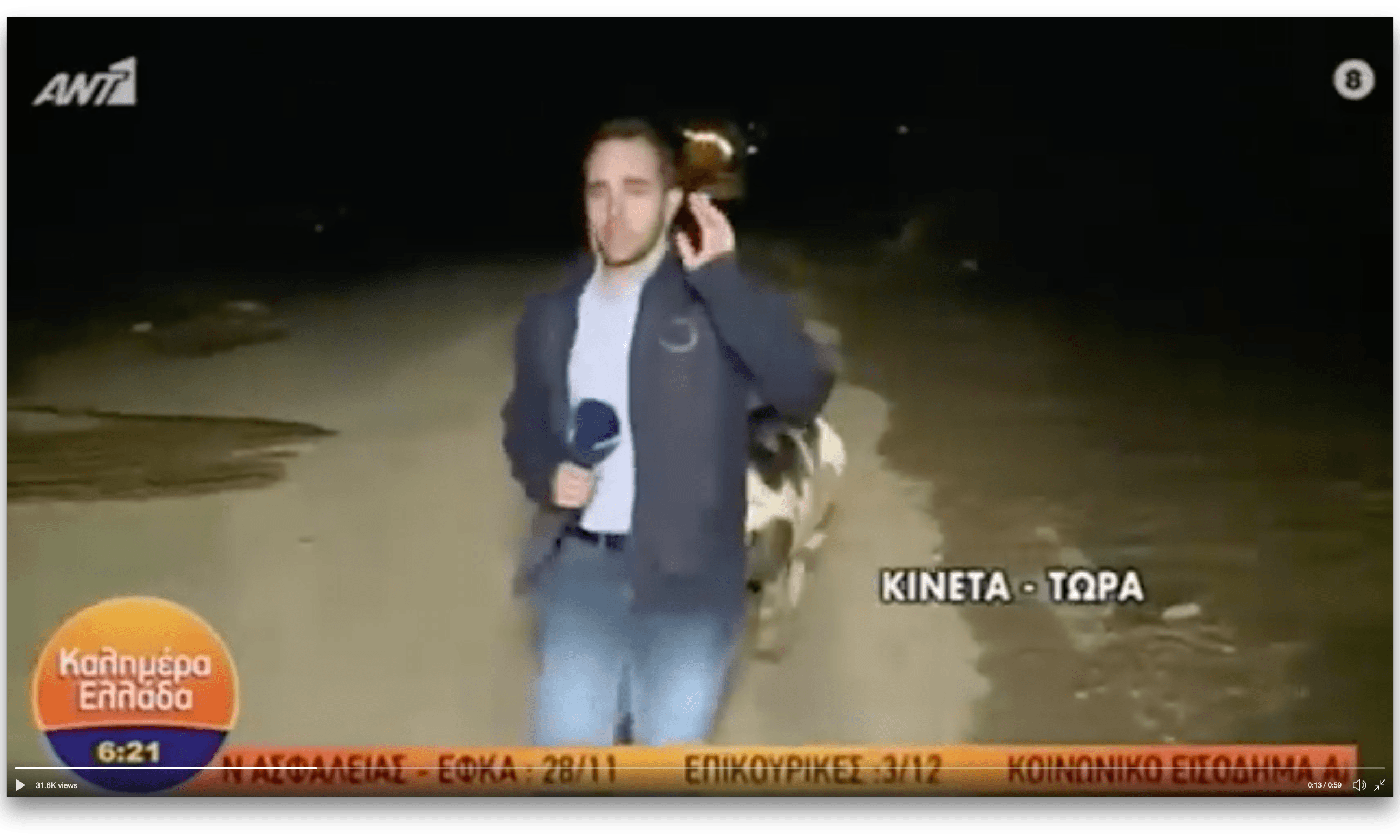 Sowing the seeds of love: amorous pig pursues Greek reporter on live TV