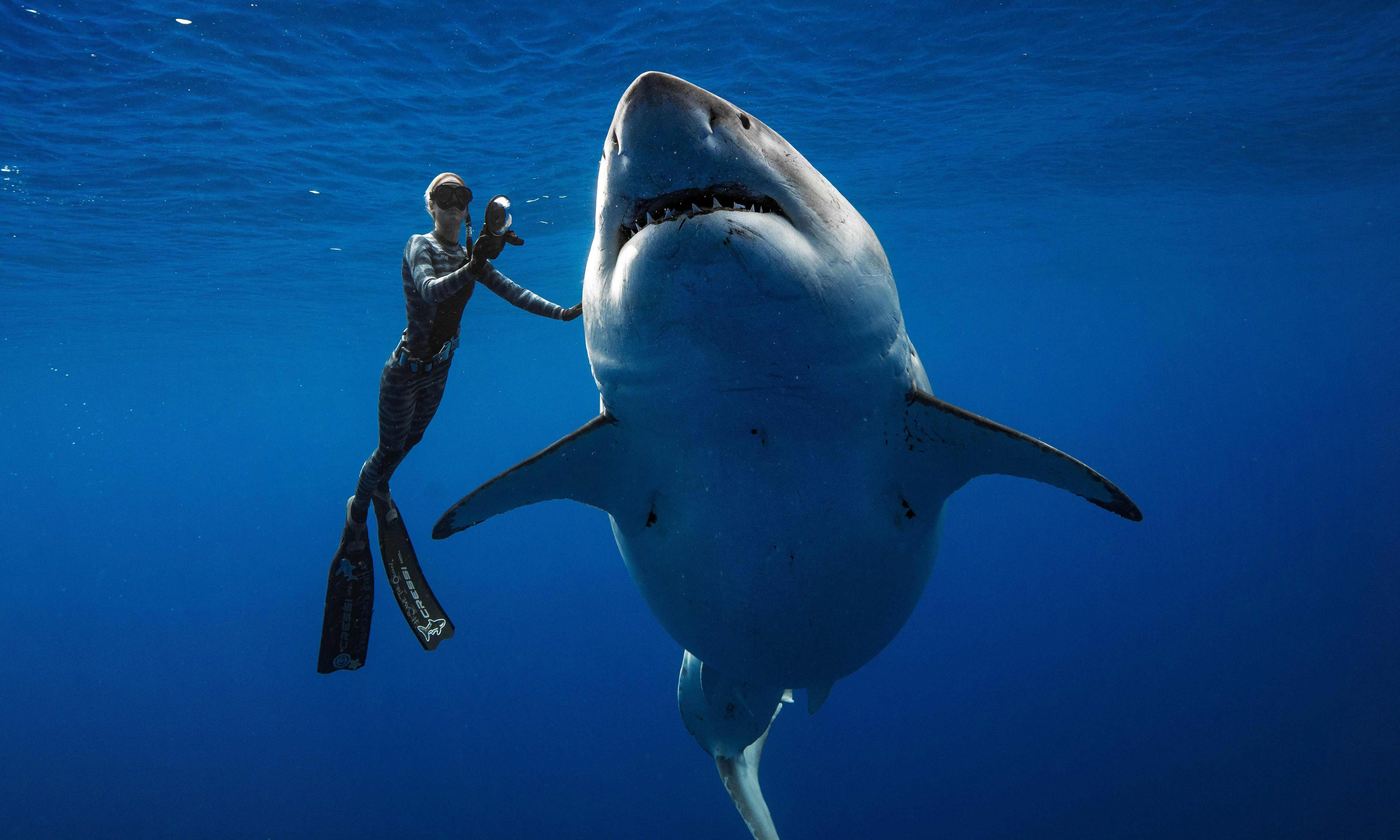 Diver filmed with huge great white: sharks must be 'protected not feared'
