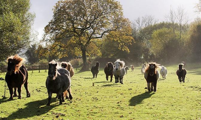 Take the kids to … The Miniature Pony Centre, Devon