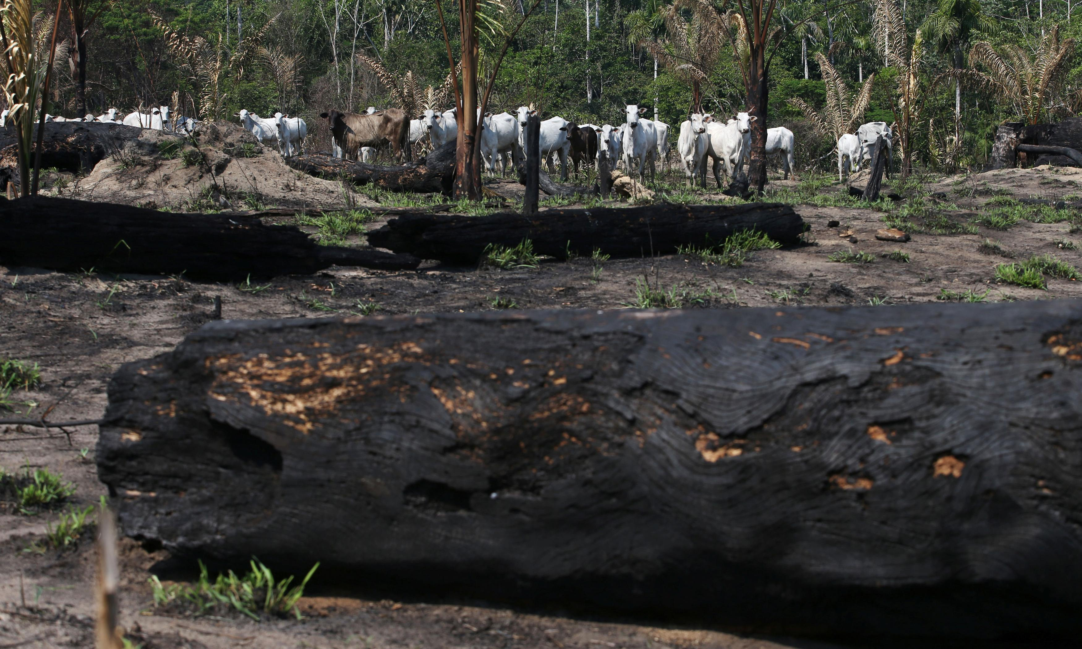 Don't invest in Brazilian meat, warn deforestation campaigners