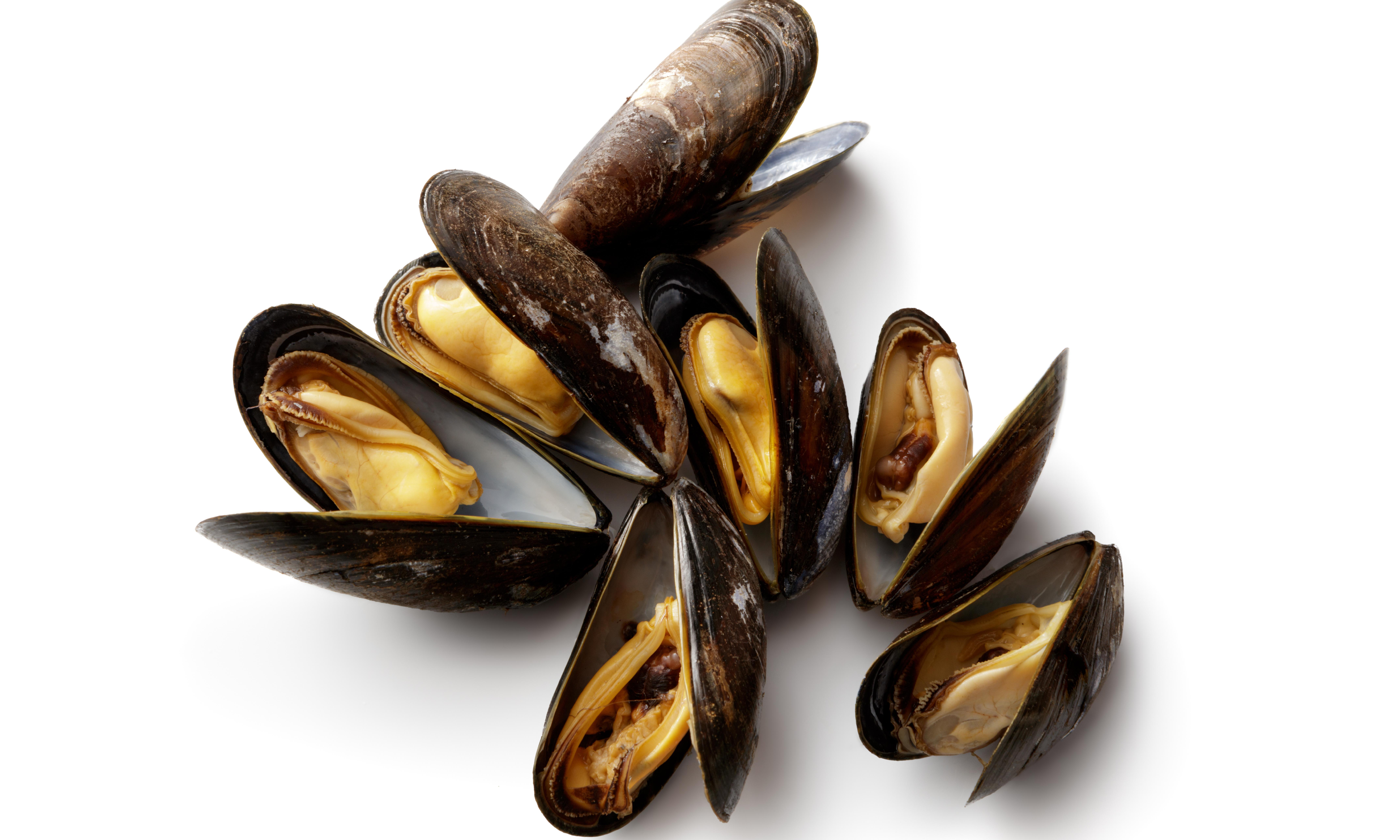 Hundreds of thousands of mussels cooked to death on New Zealand beach in heatwave